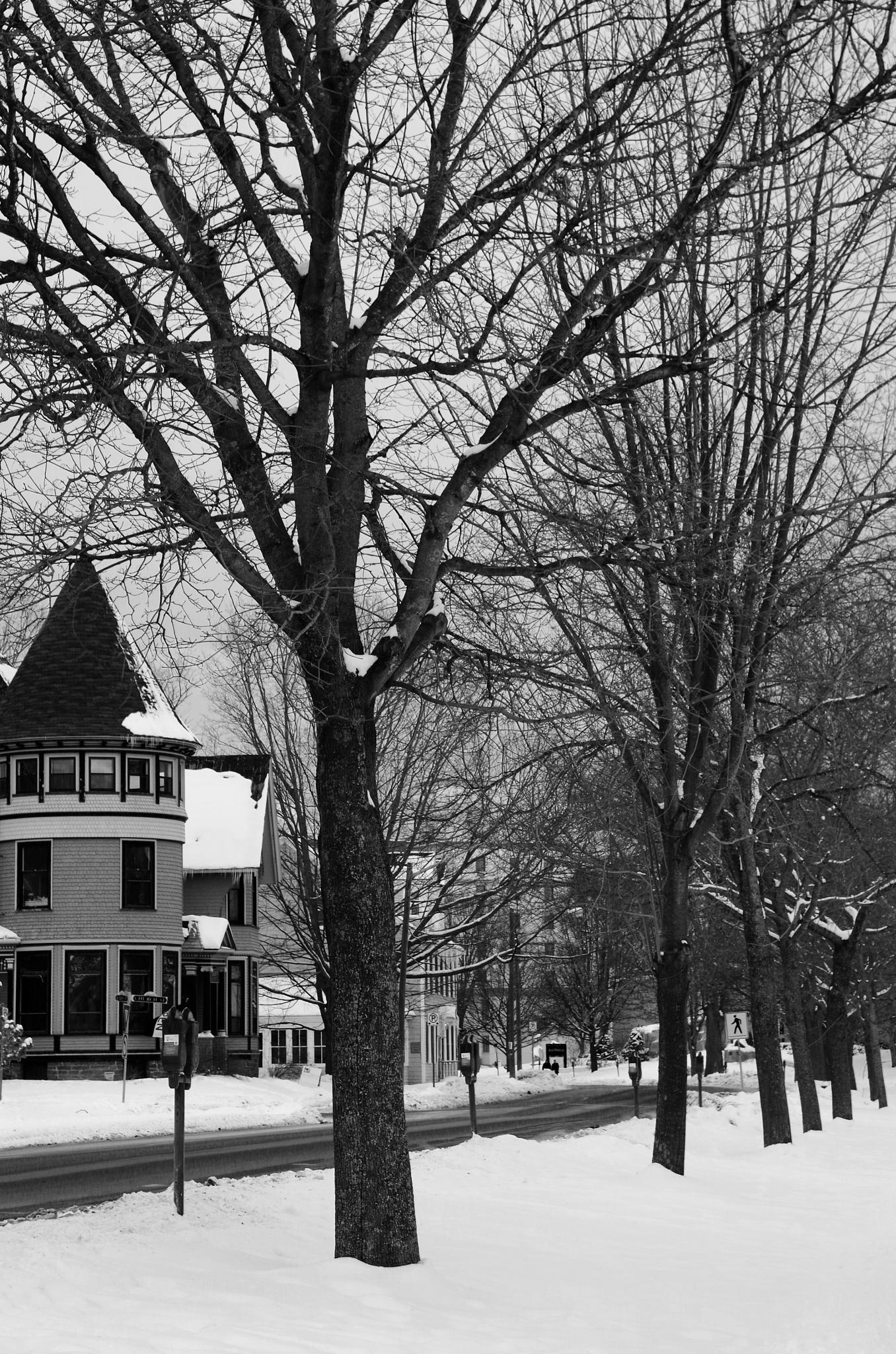 Historic Fredericton, New Brunswick, Canada by Isabella