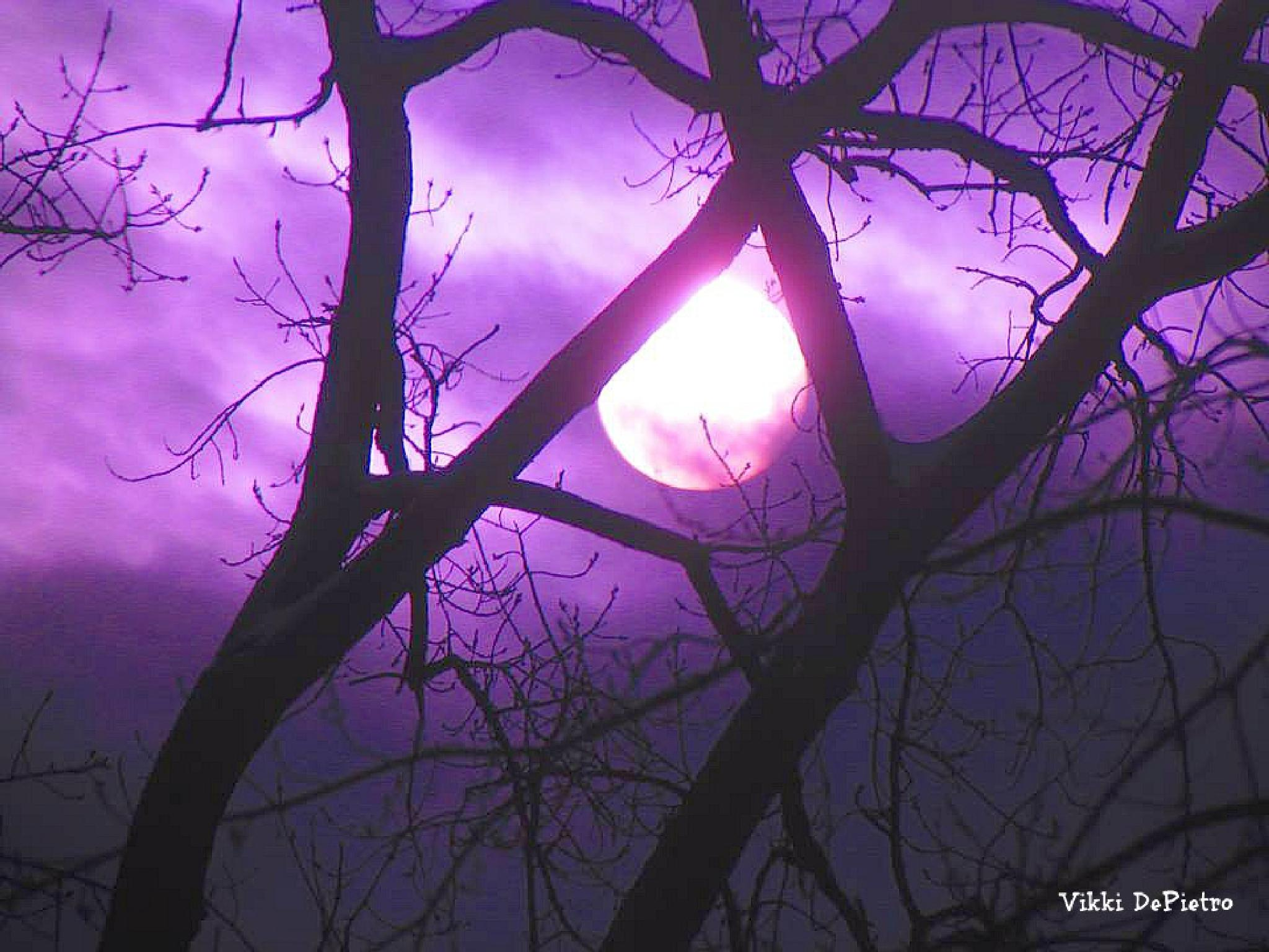Tinted Sun by Vikki Schifano