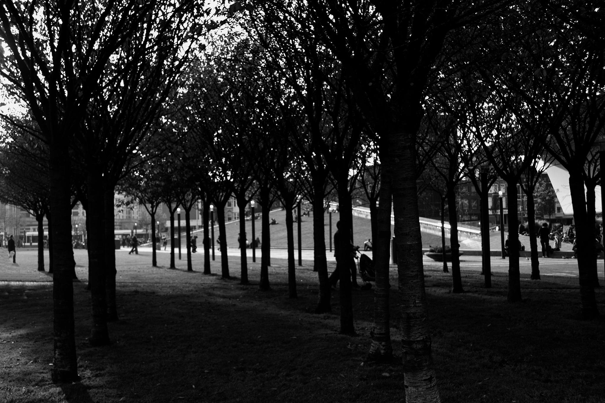 Wondelpark by Fred Matos