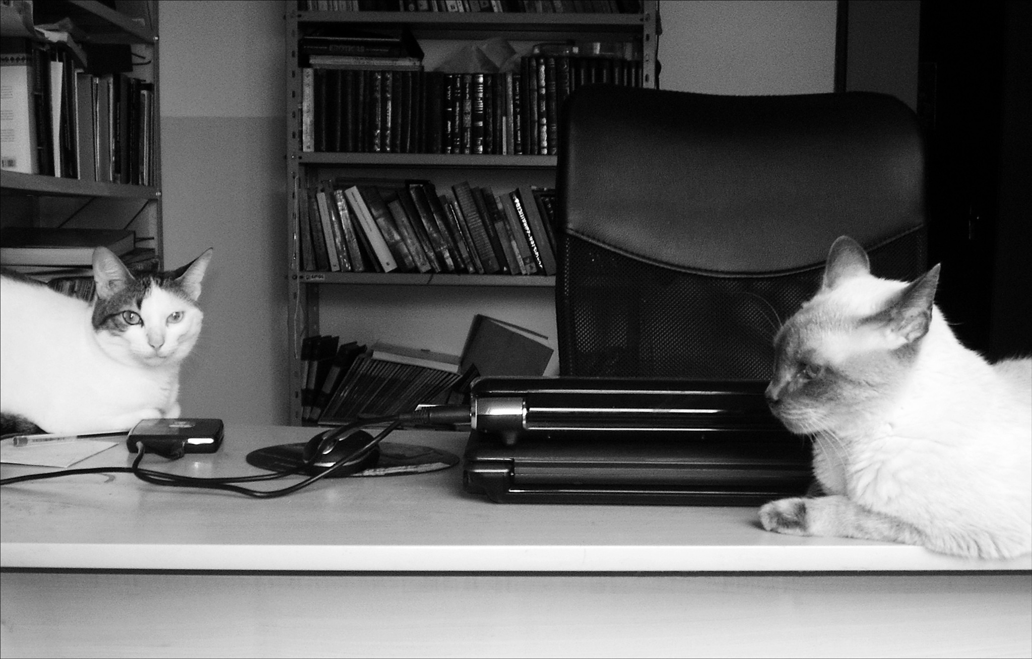 two cats on my desk by Fred Matos