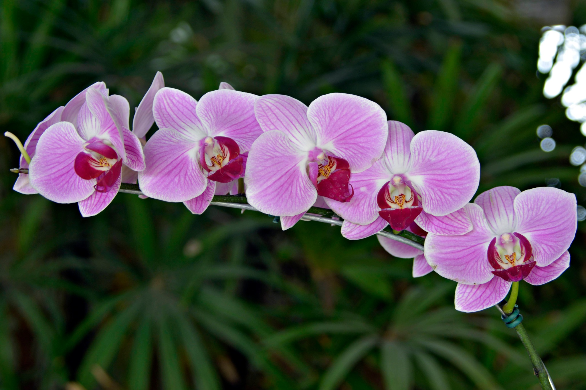 orquídea  by Fred Matos