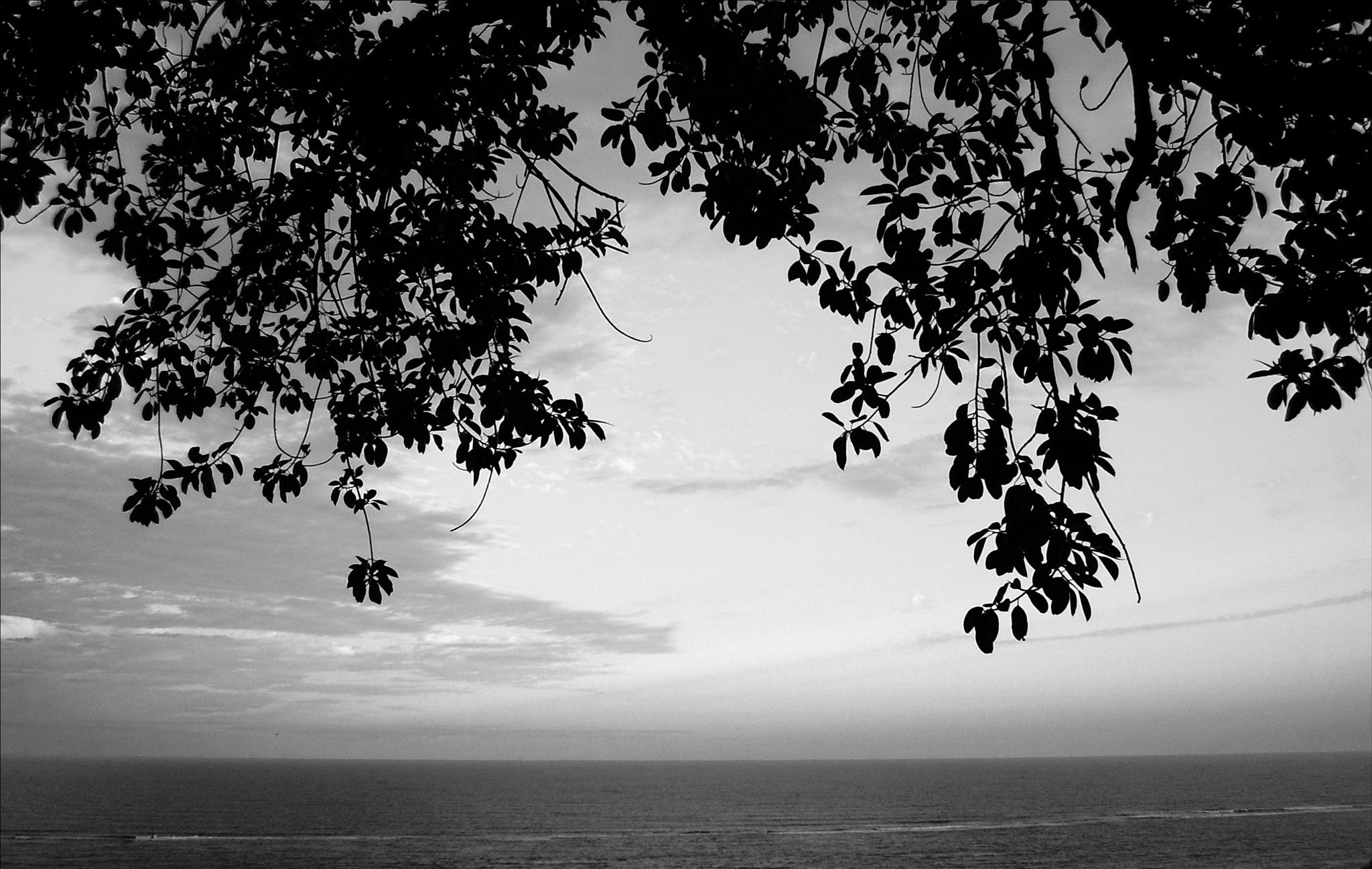 galhos e folhas pendentes sobre o mar by Fred Matos