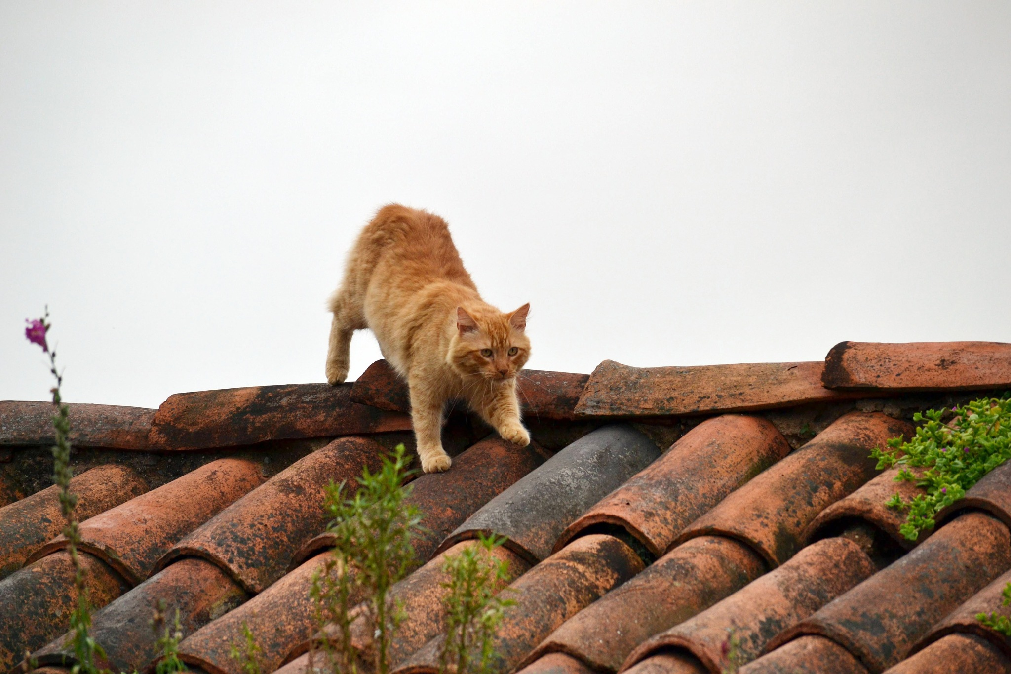one day, a cat - photo 1 by Fred Matos