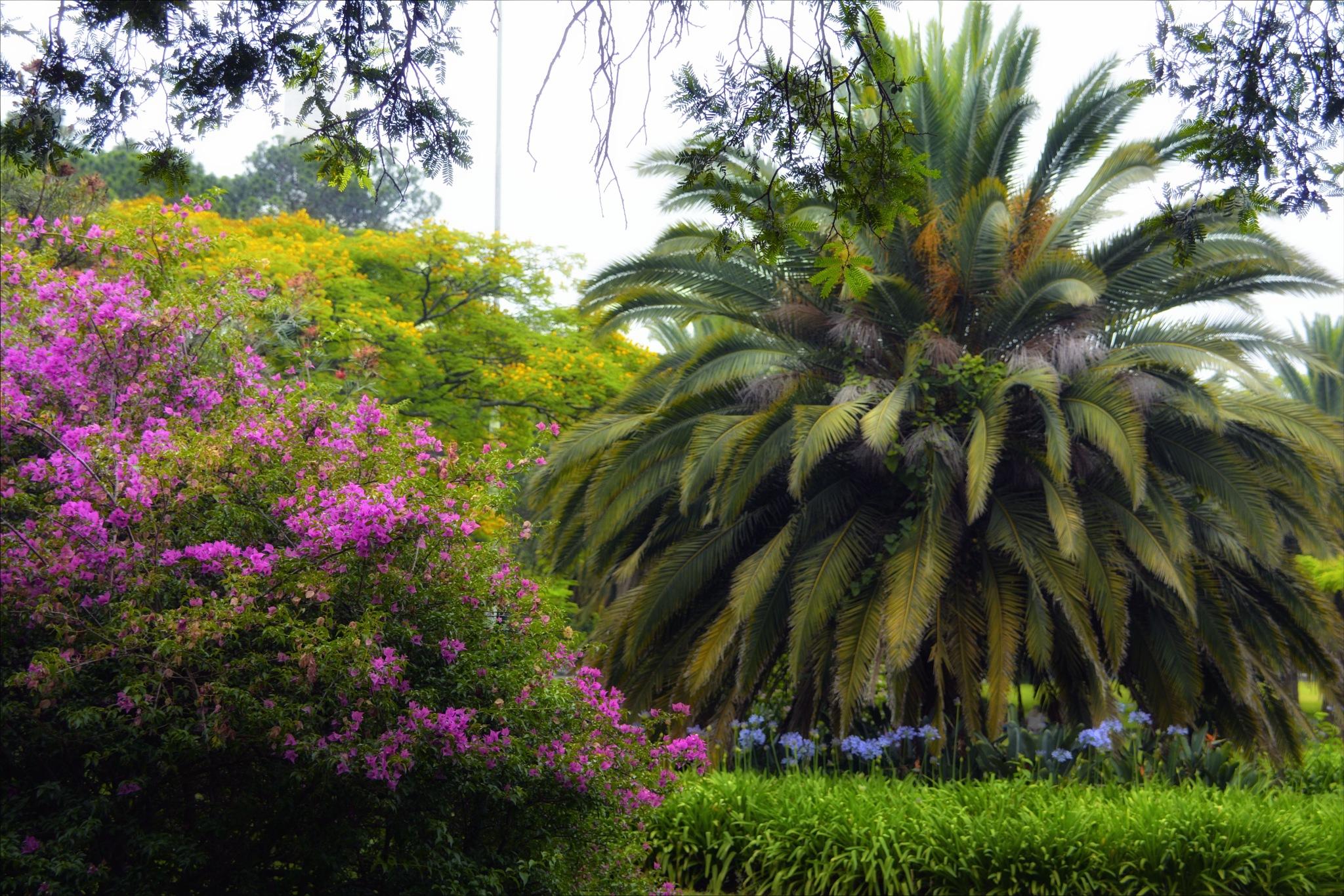 tropical garden  by Fred Matos