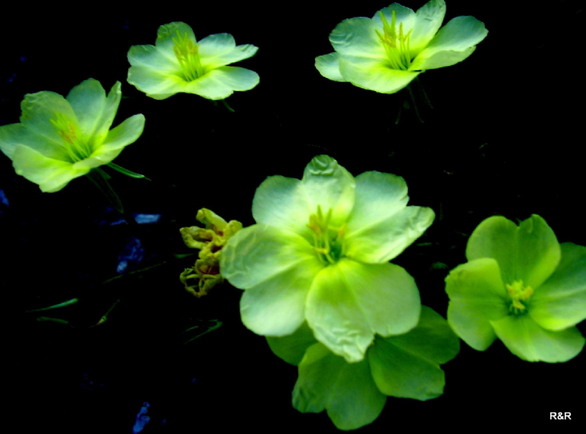 Moonlight Flowers by lana.cezzar