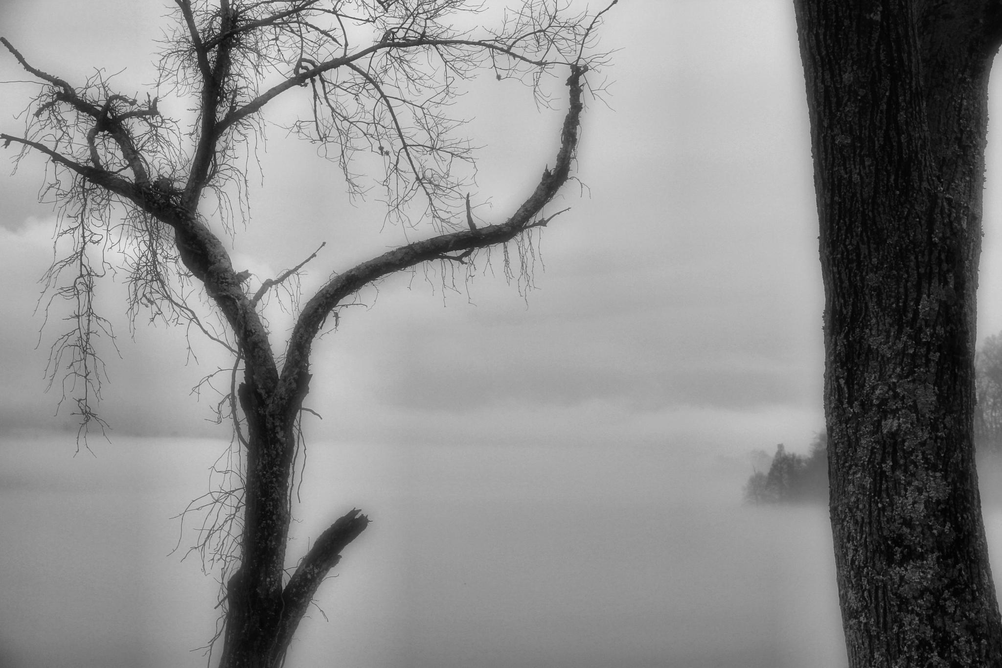 Rainy and Foggy Lake by daryl.chamlee.9