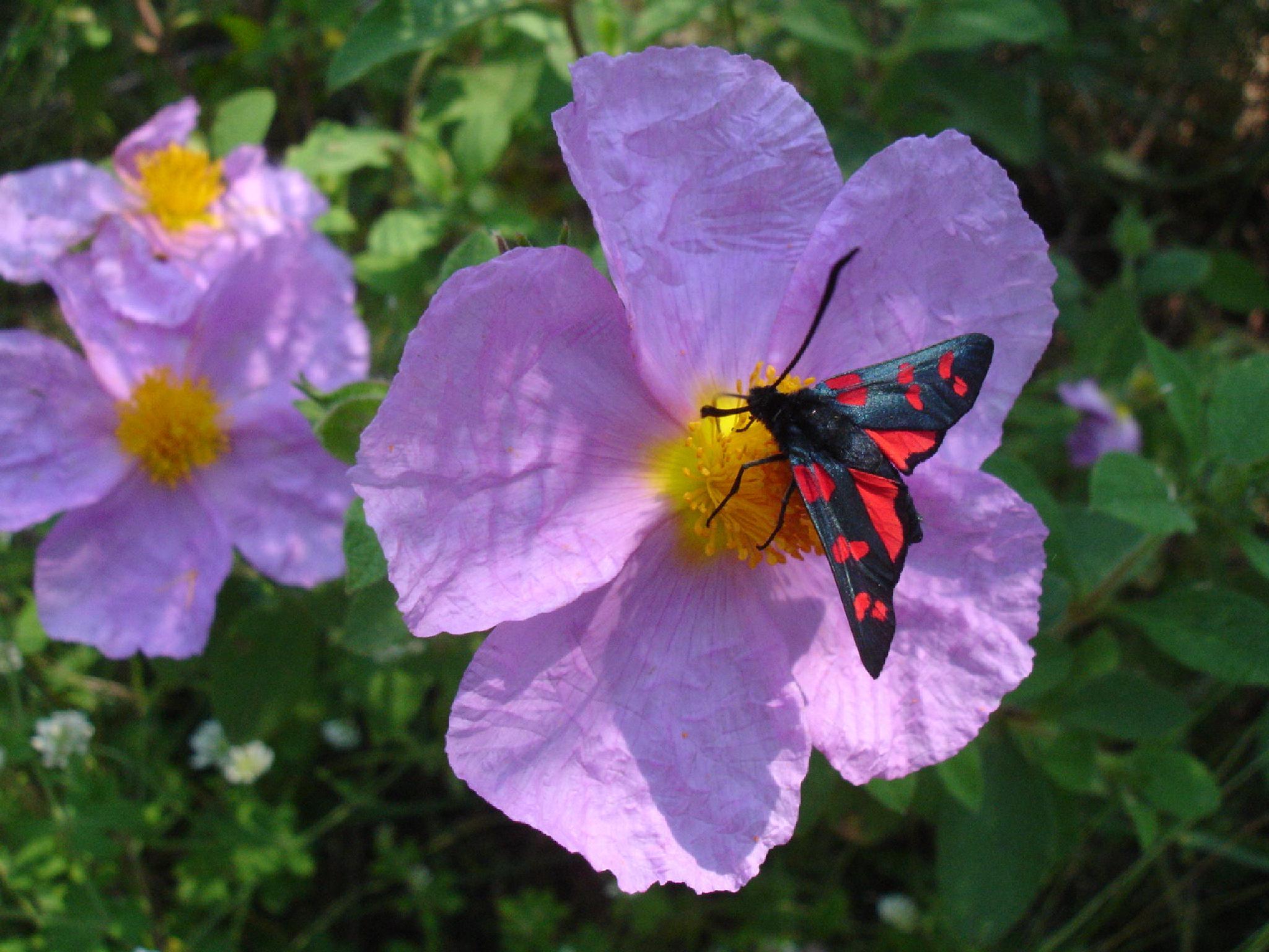 Flowers and butterflies by Saygın Saner