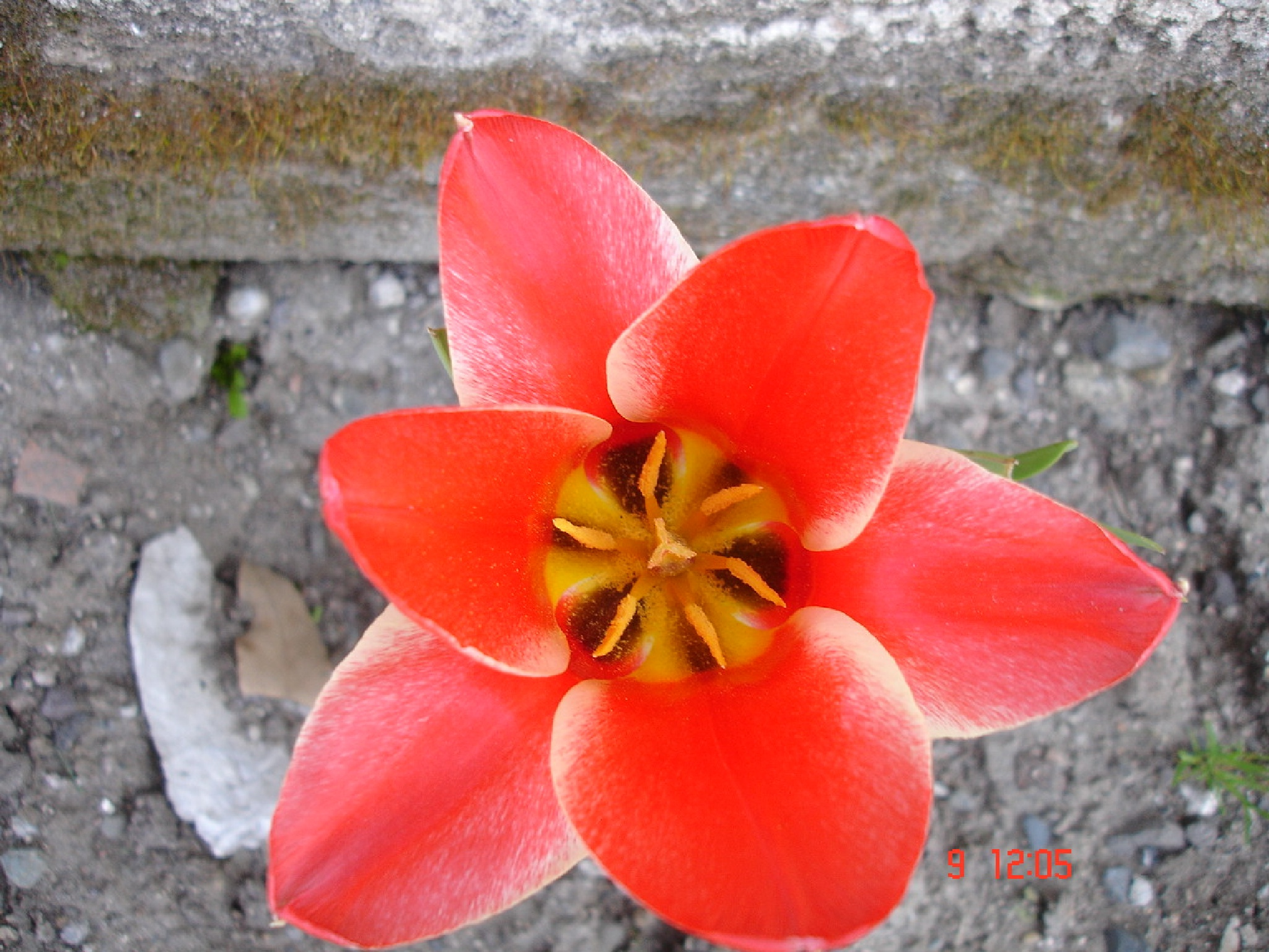 I am a flower. by Saygın Saner