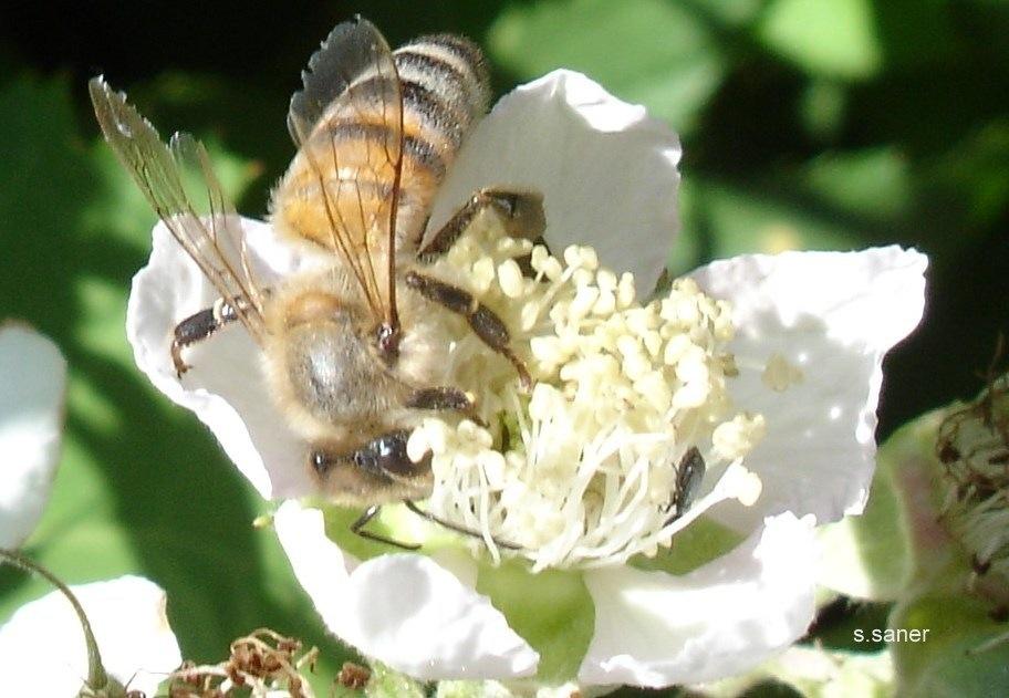 Flower, Bee by Saygın Saner