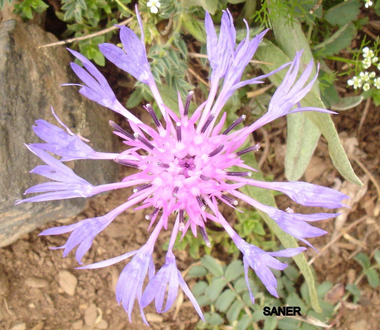 NATURE by Saygın Saner