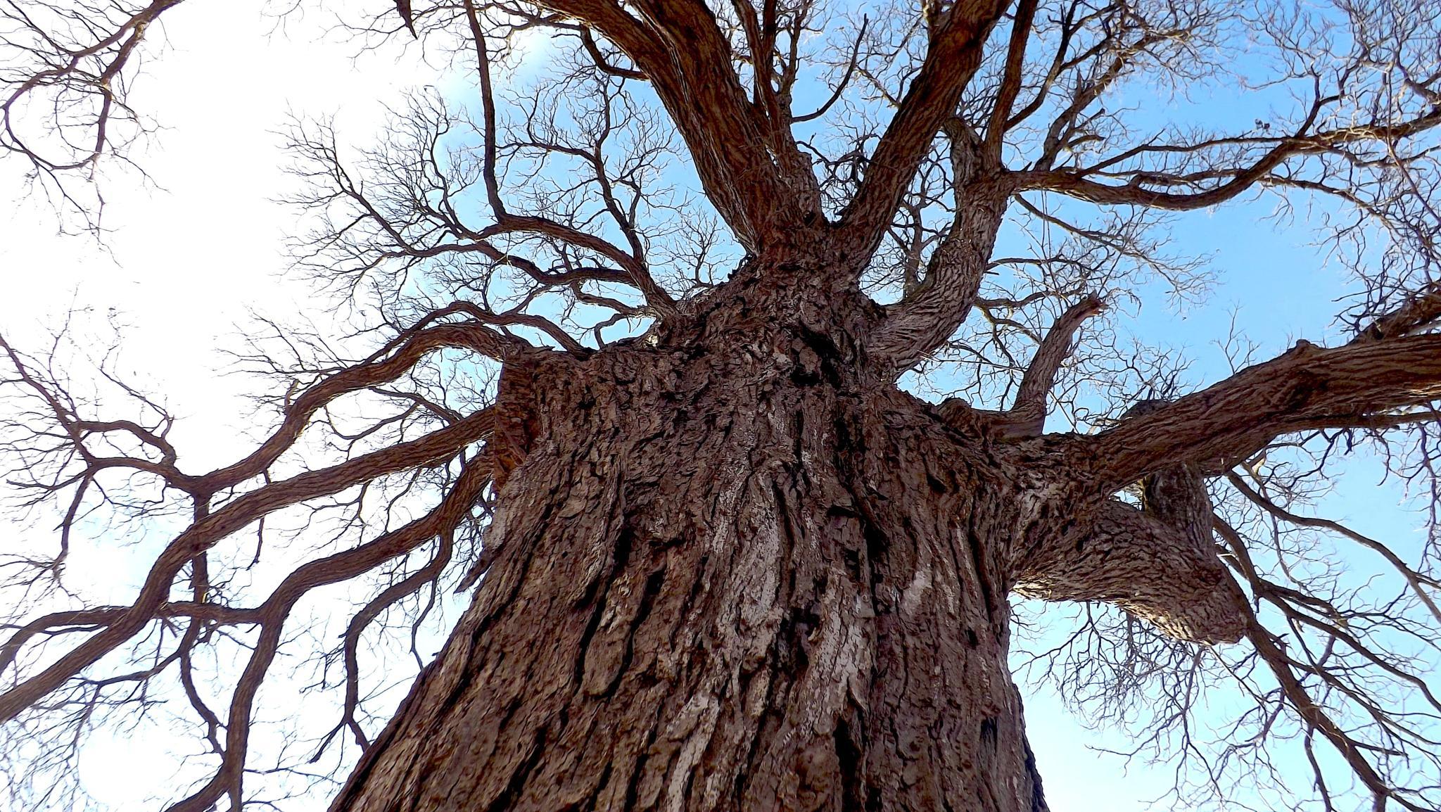 Scary Tree by ccbarron1