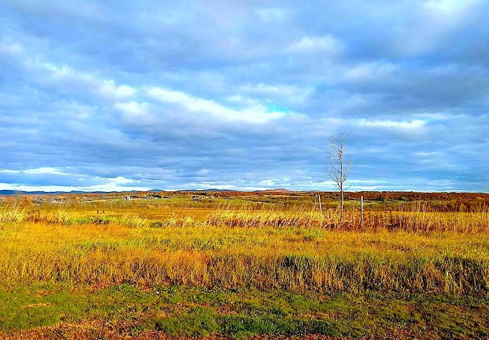 Grasslands by ccbarron1