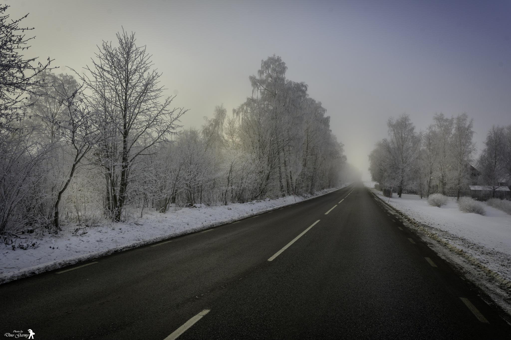 Winter by Dino