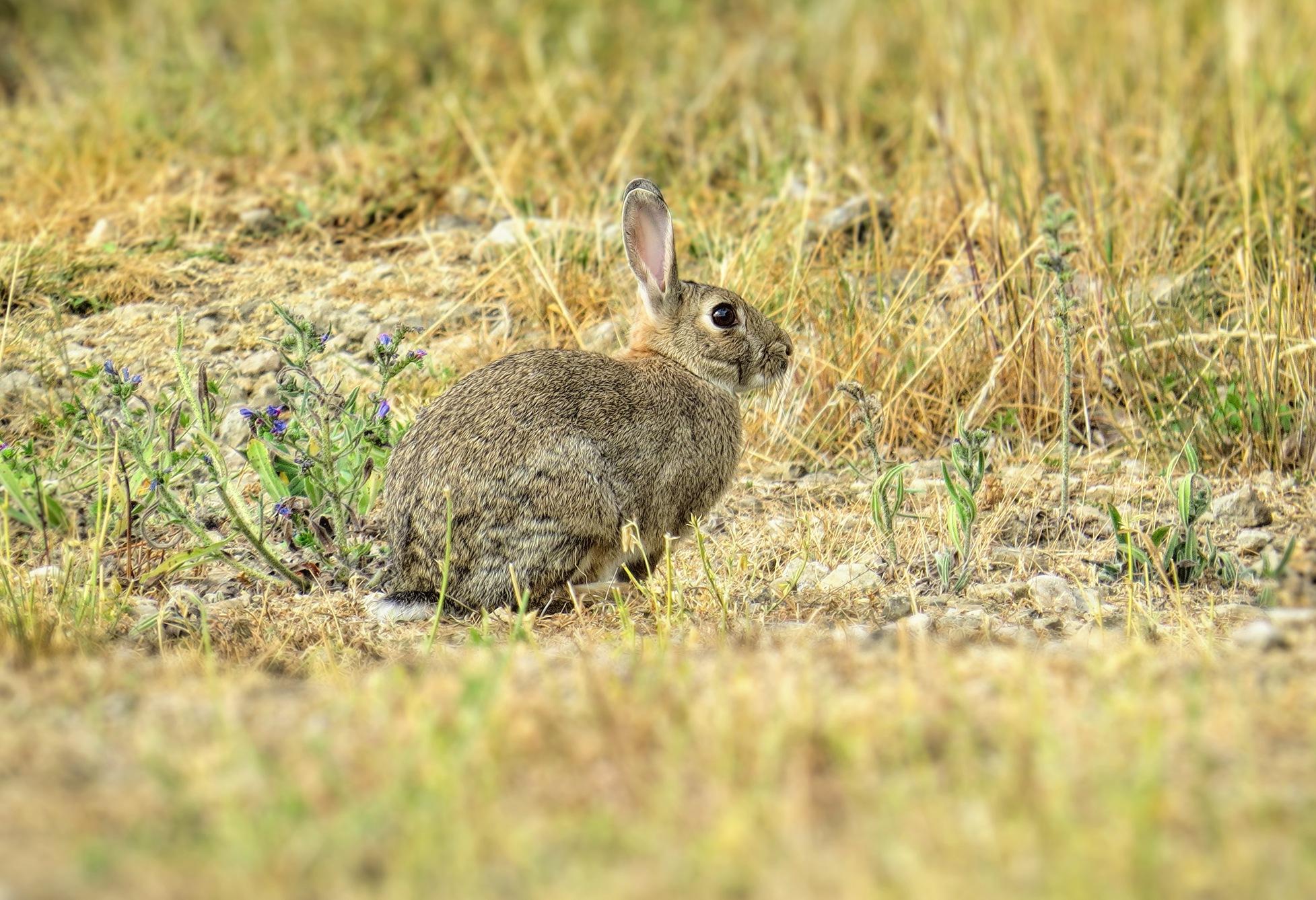 Wild rabbit by susanne.m.andersson.92