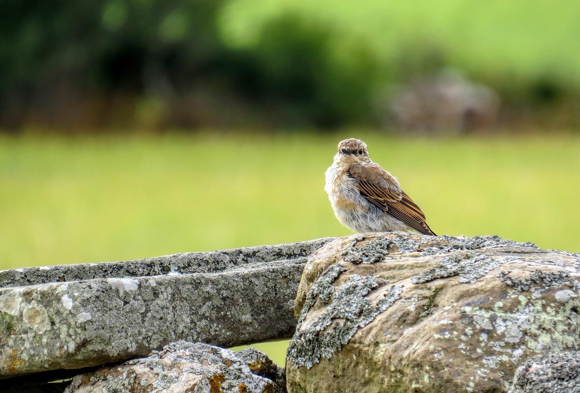wild bird by susanne.m.andersson.92