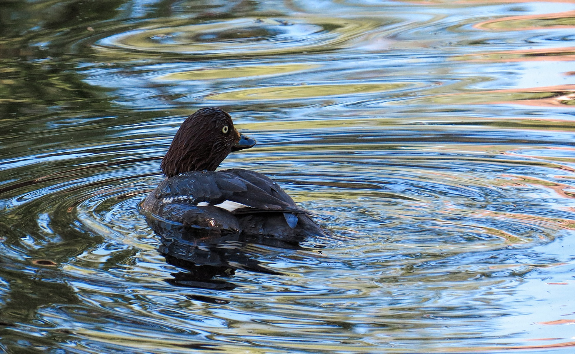 Golden Eye by susanne.m.andersson.92
