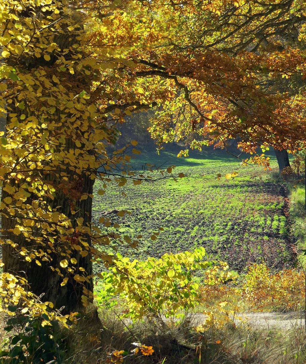The Oaks Change Color by susanne.m.andersson.92
