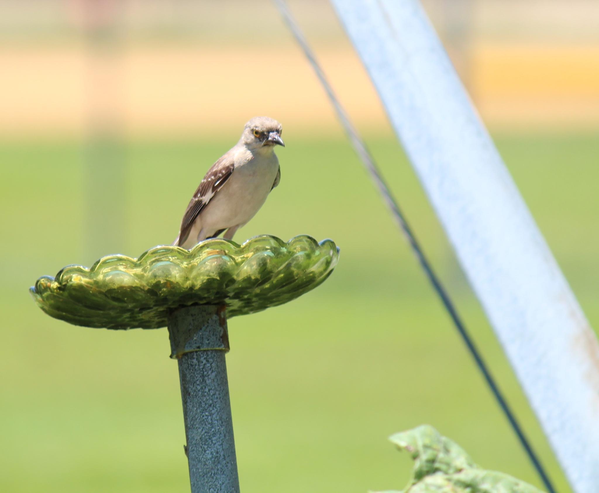 angry bird by bernice.desmond