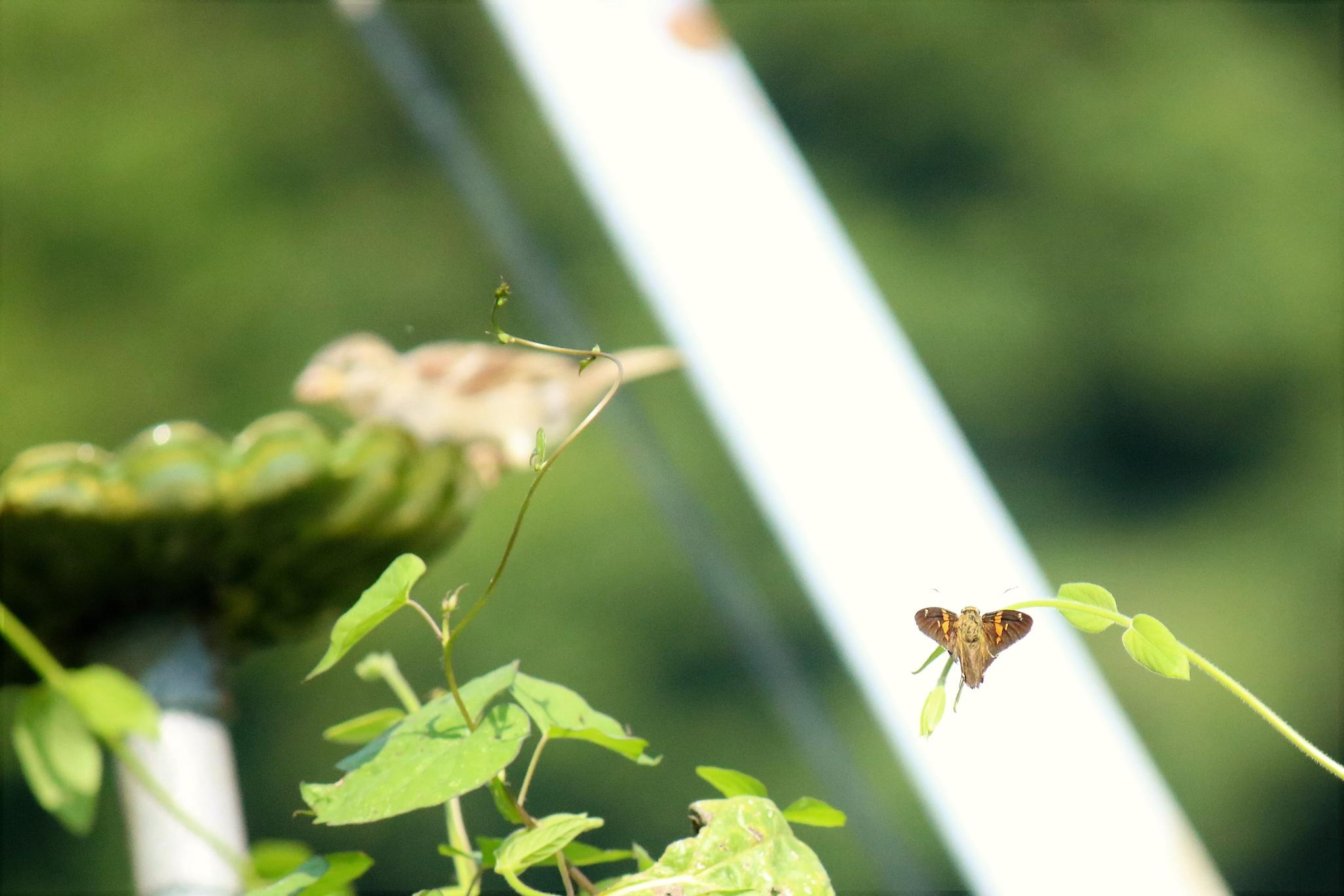 moth? by bernice.desmond