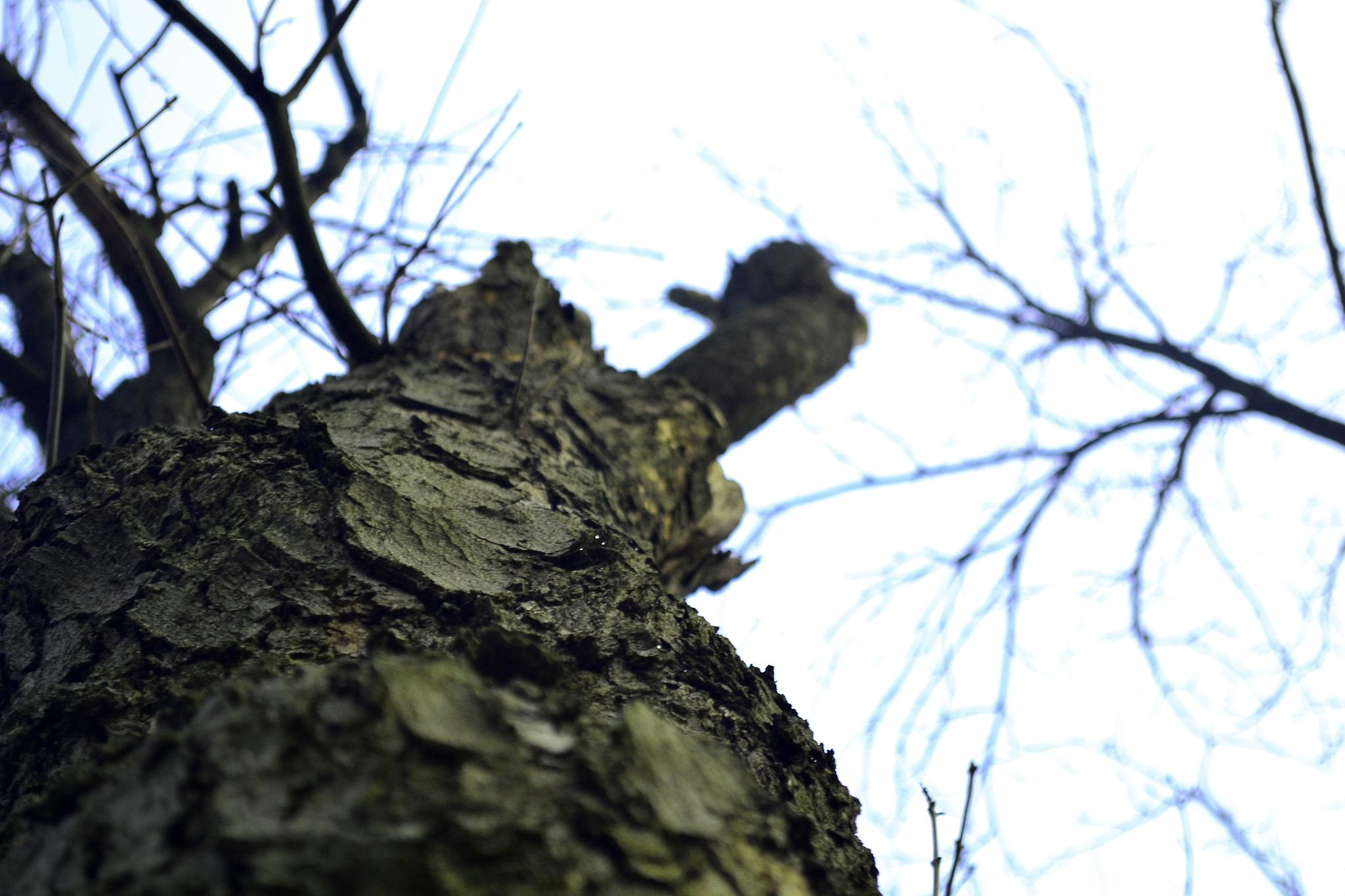 Tree by Andrei Postolea