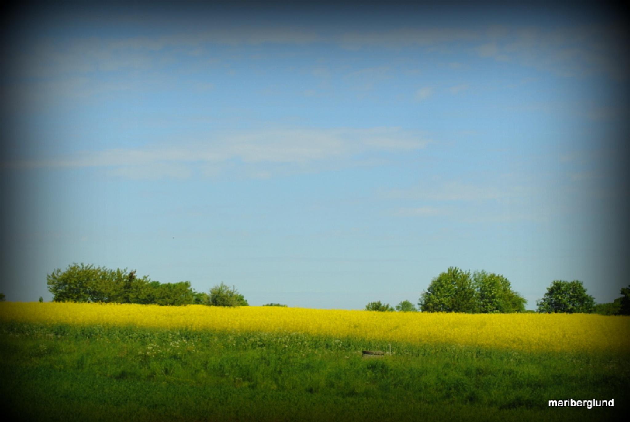 Summer day in Sweden by mari.berglund.5