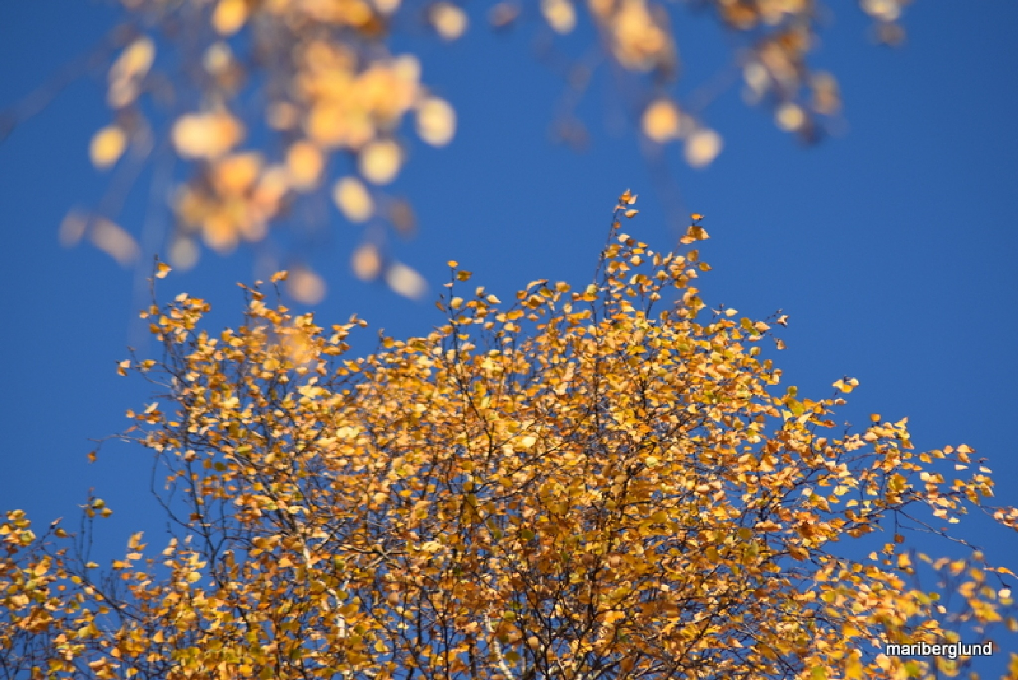 Autumn by mari.berglund.5