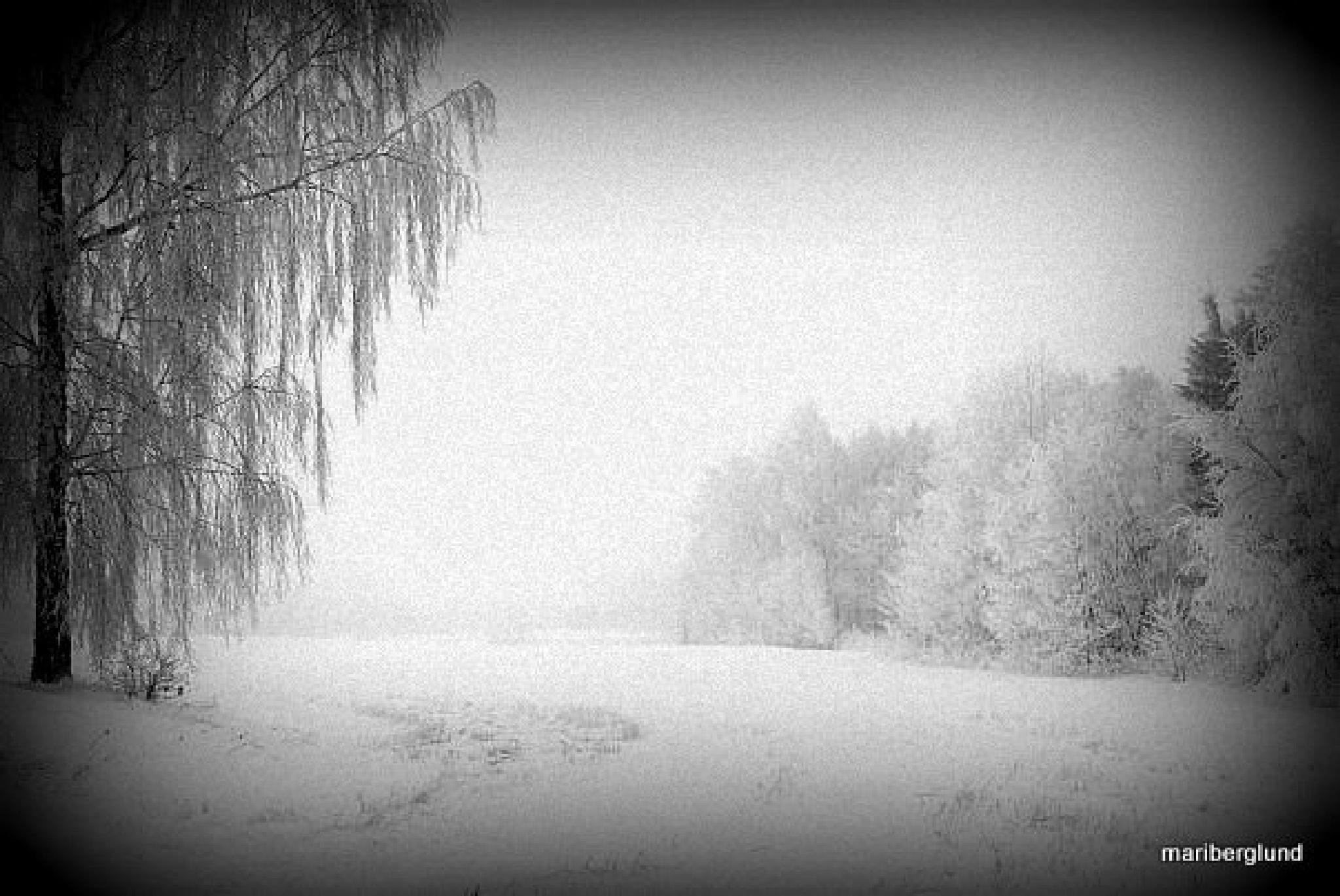 Winter morning in Sweden by mari.berglund.5