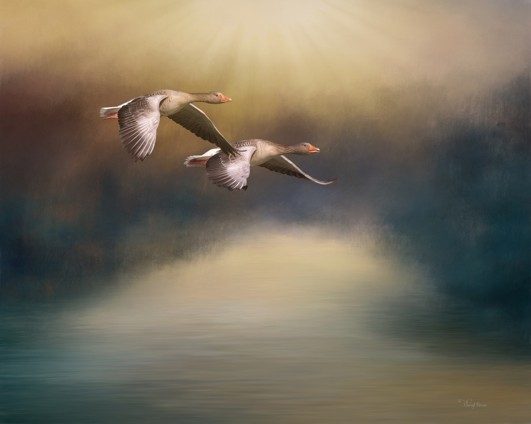Geese flying by Cherbeni