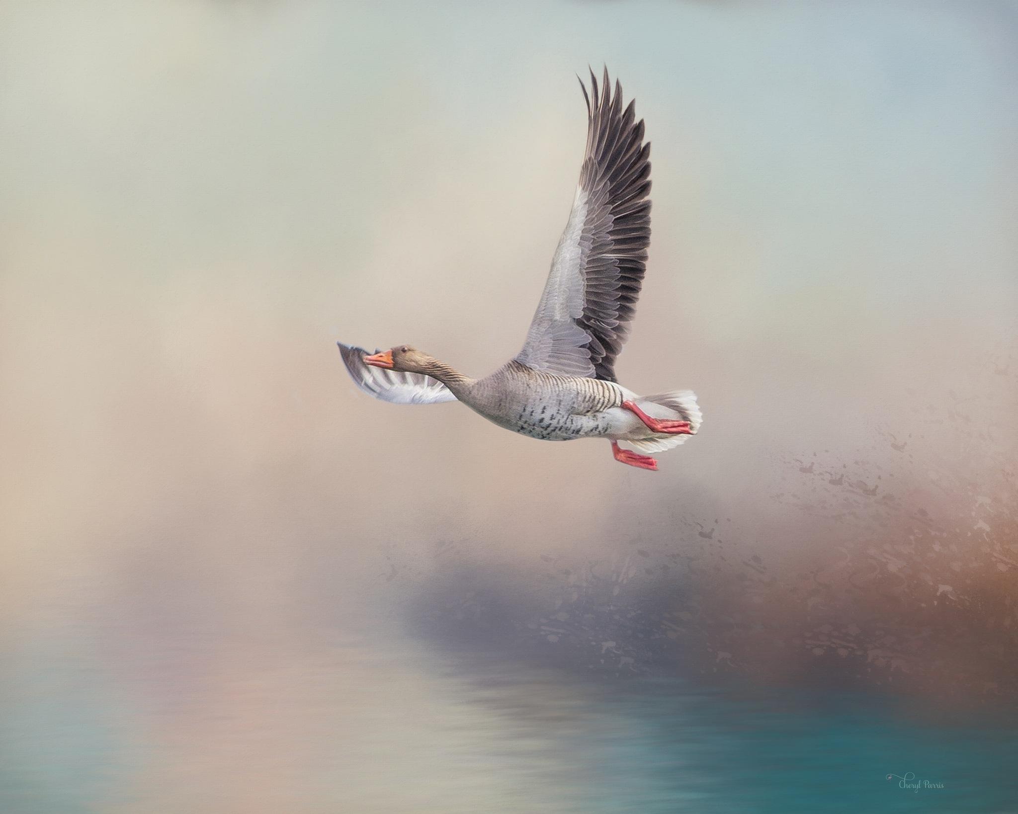 Goose in flight by Cherbeni