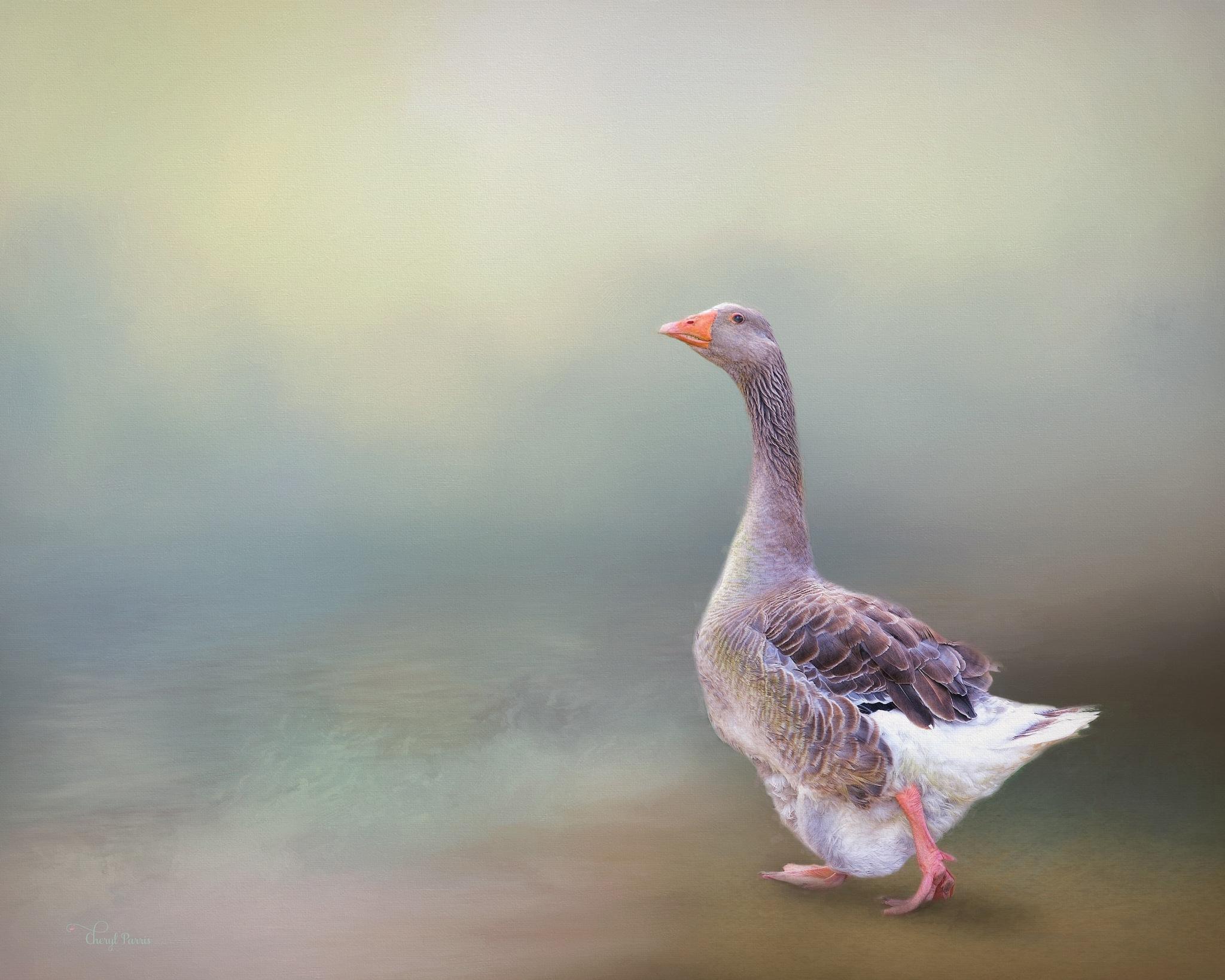 Goose Strolling Along by Cherbeni