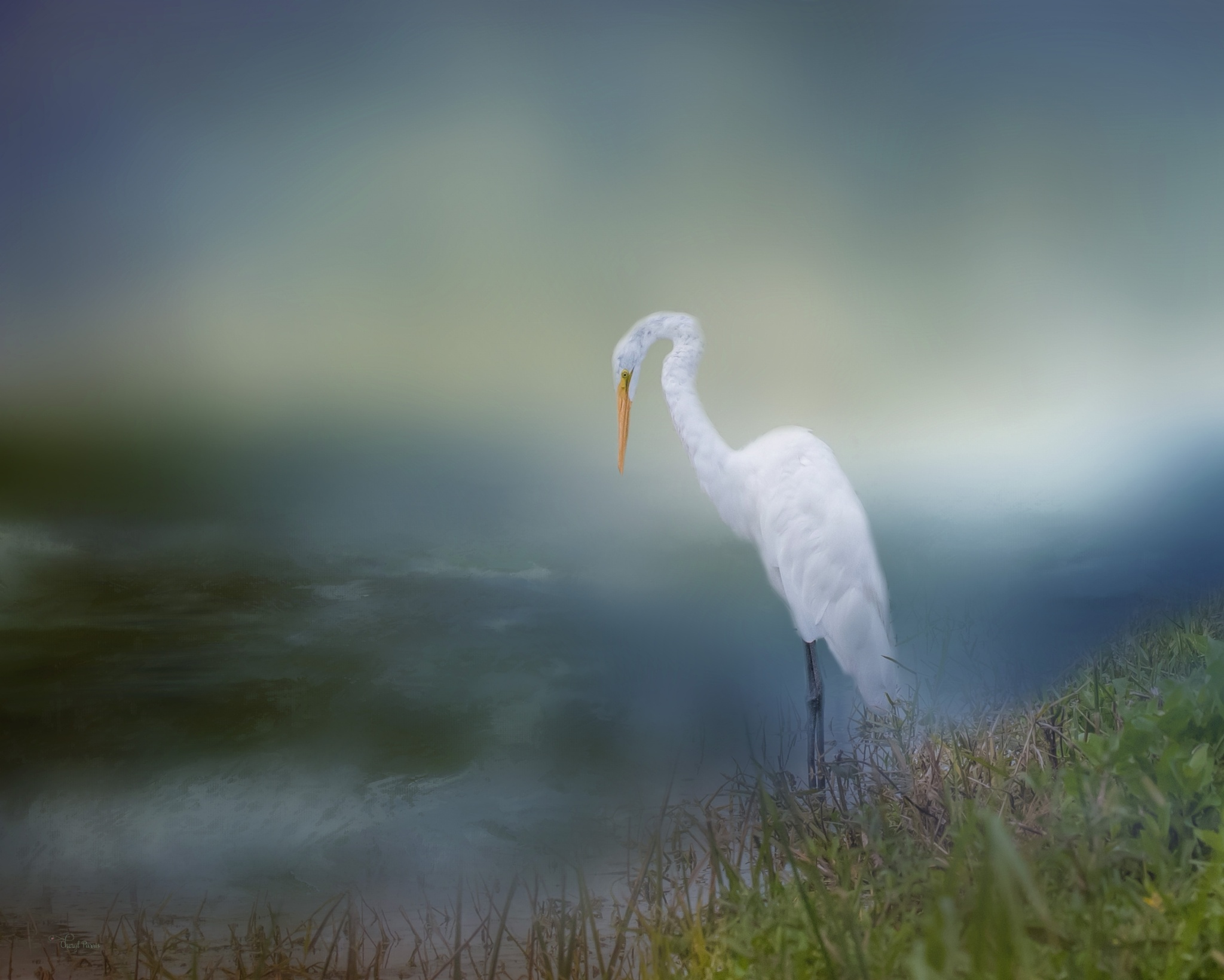 Great Egret looking for fish by Cherbeni