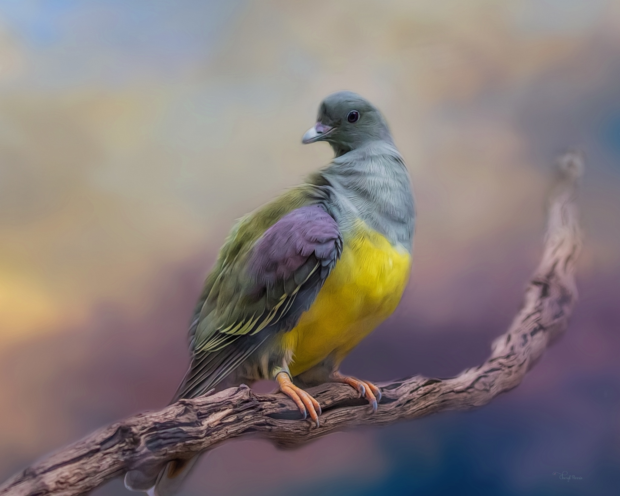 Bruce's Green Pigeon by Cherbeni