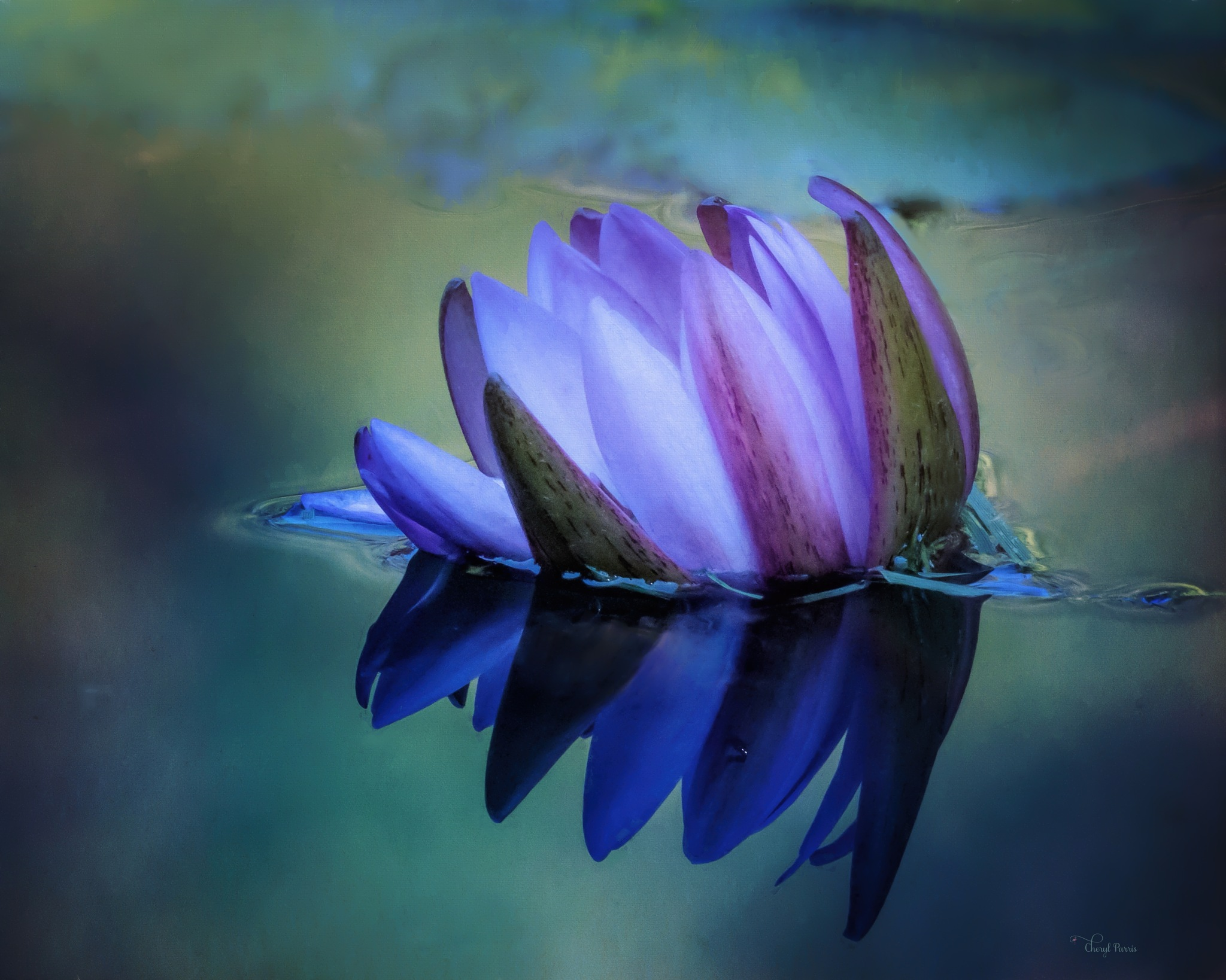 Purple Water Lily by Cherbeni