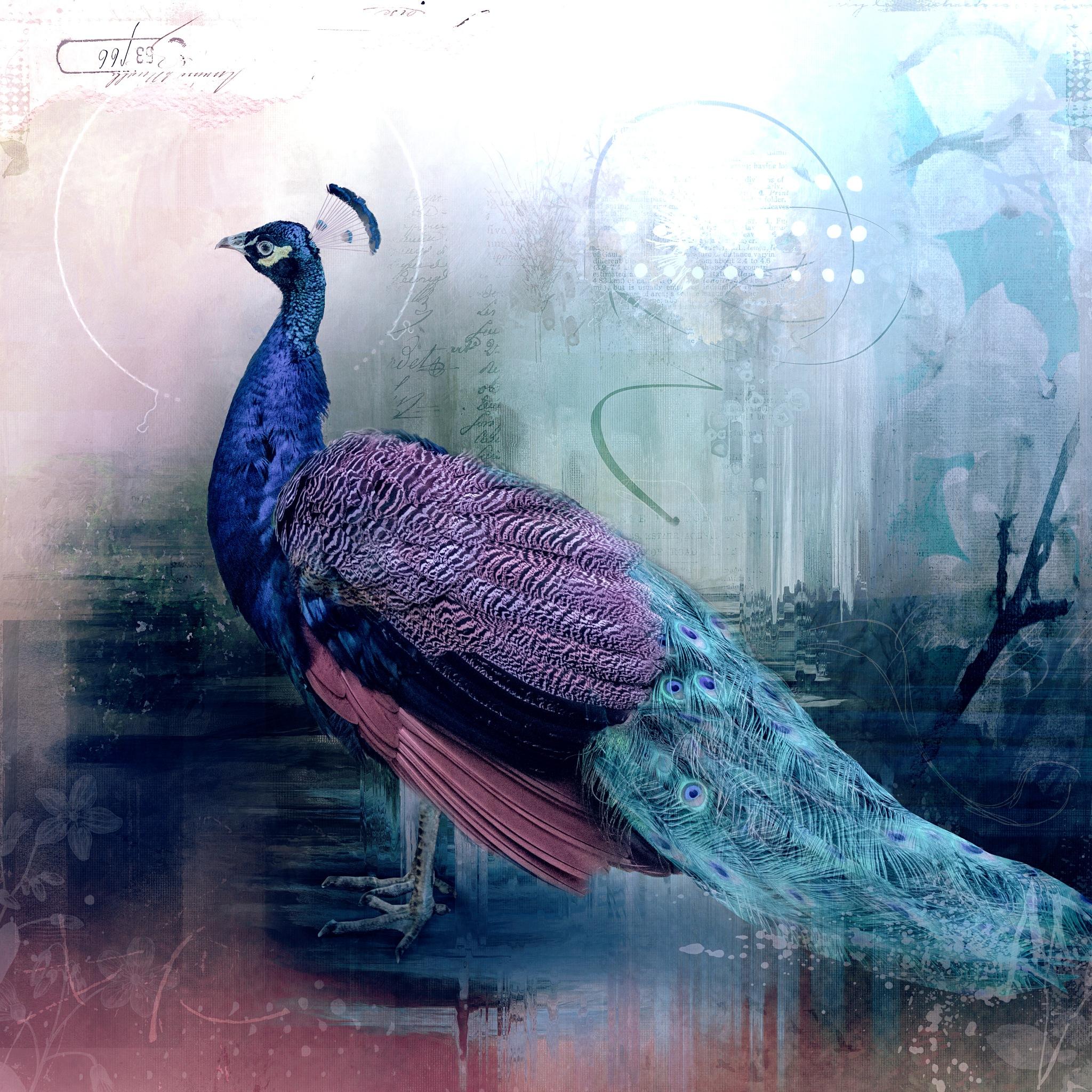 Be a Peacock by Cherbeni