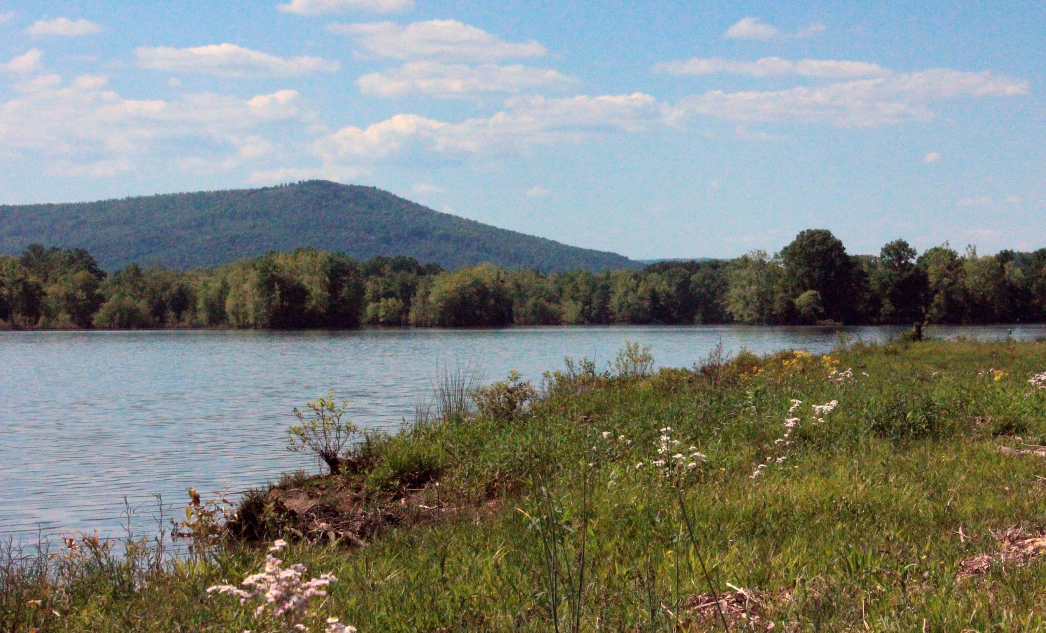 Photo in Landscape #river #spring #sunshine #nature