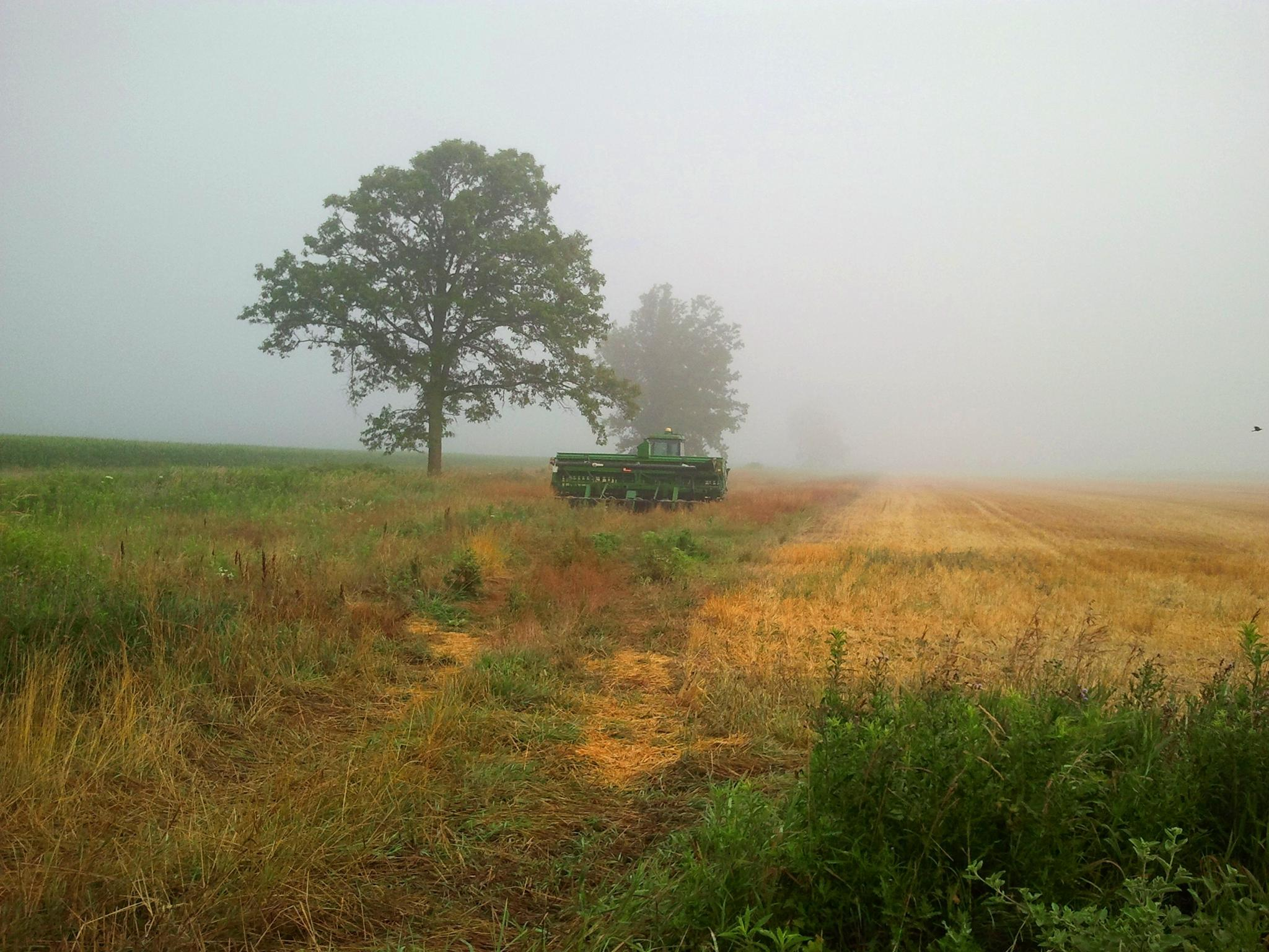 Morning Fog by idalif