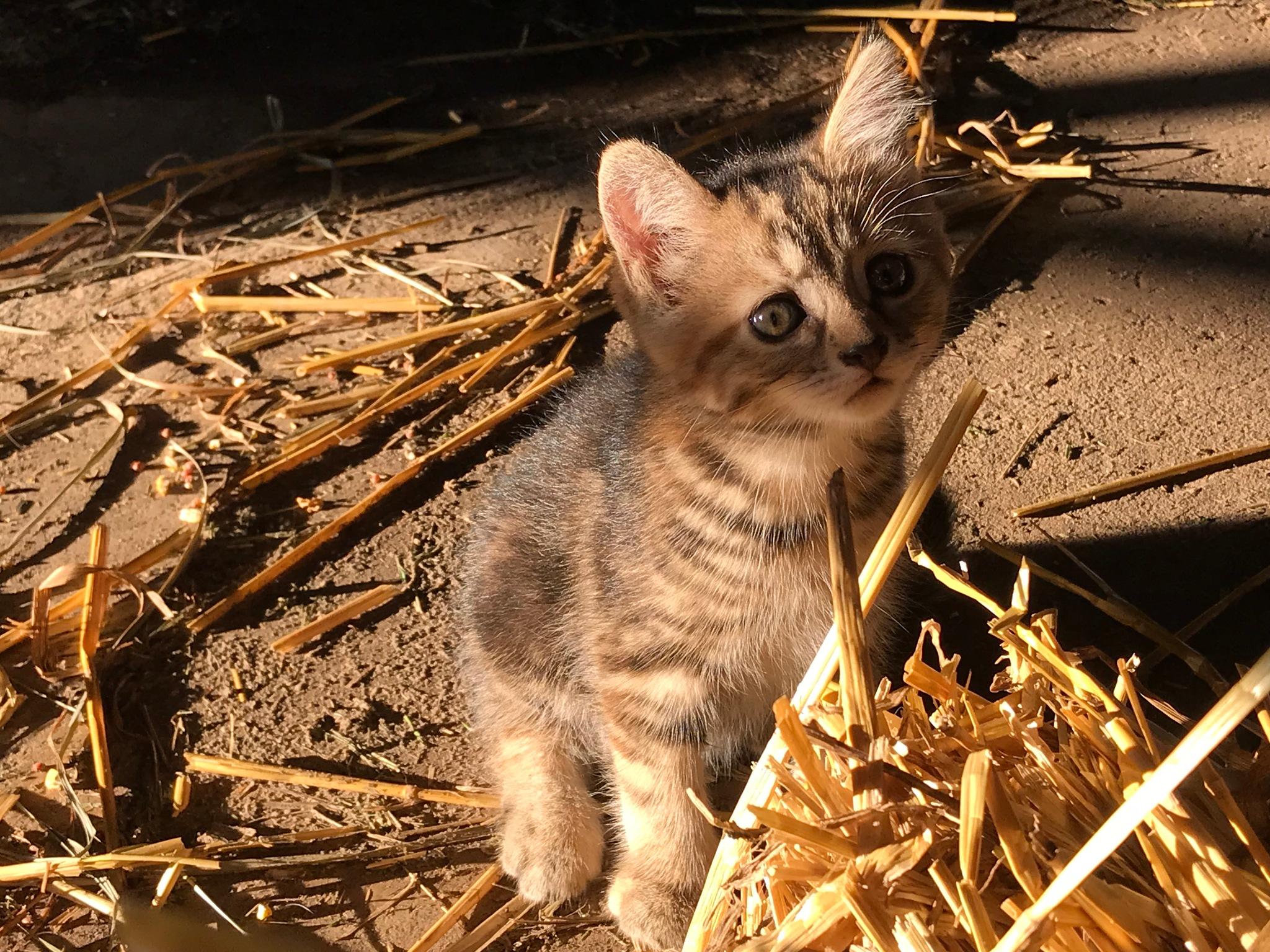 Kitten Update by jeanne.winstead