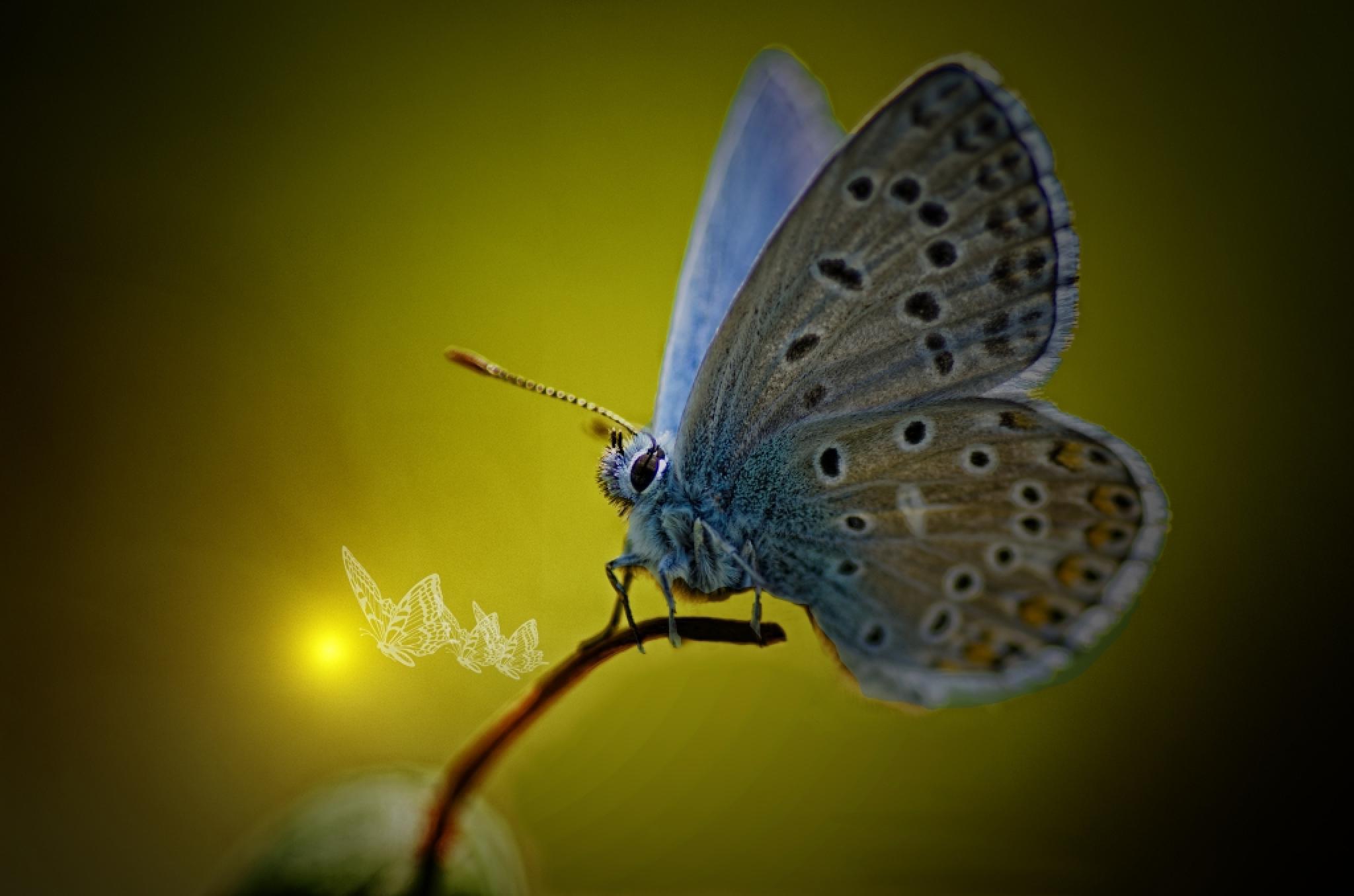 Butterflies by claudio.rivellini