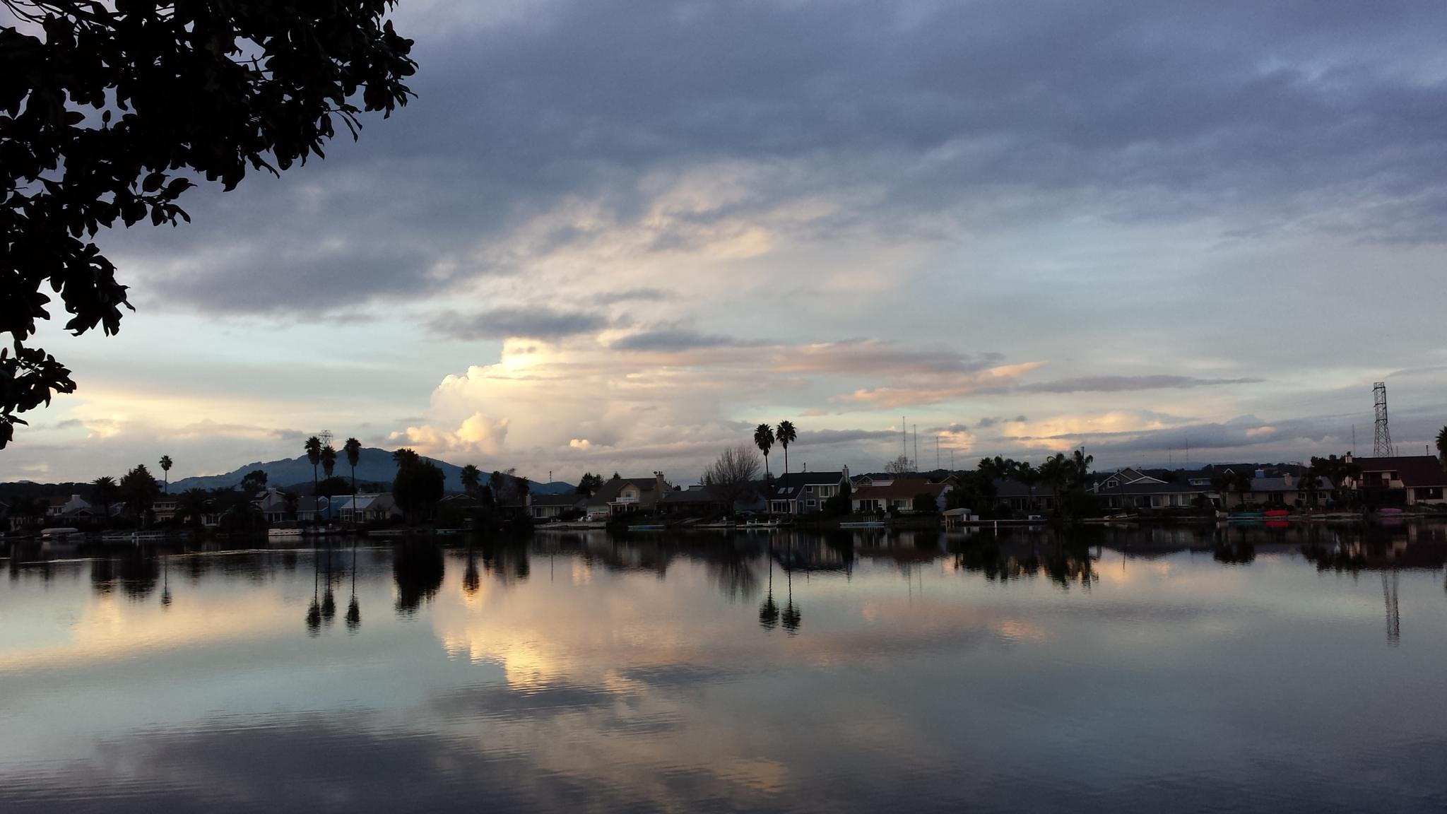 Backyard Reflections by Annie Molyneux
