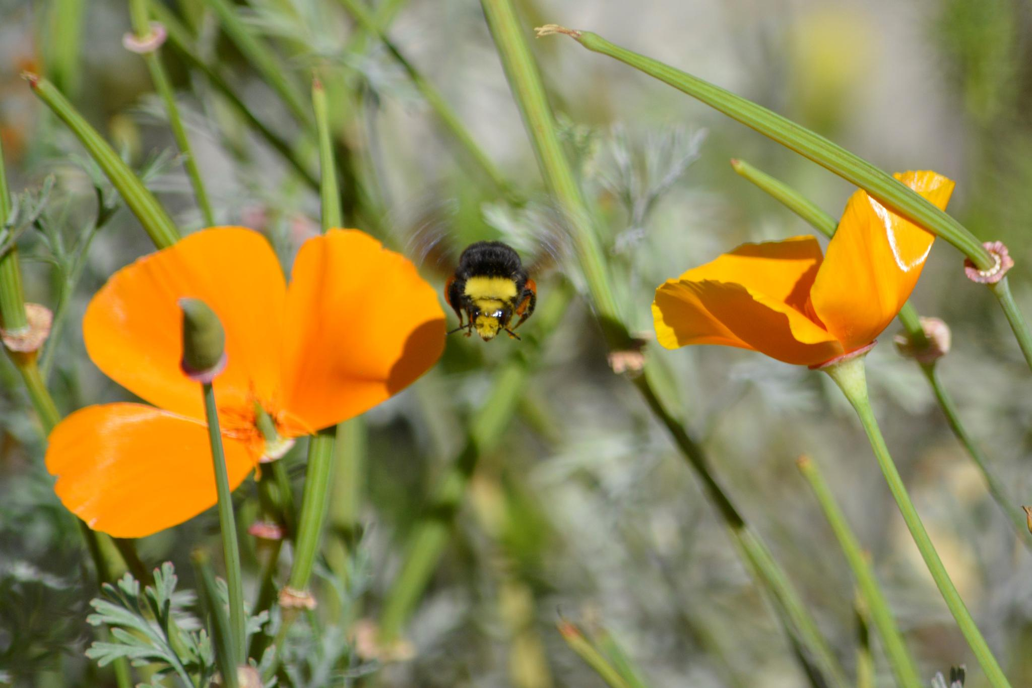 Bee in the Middle by Annie Molyneux