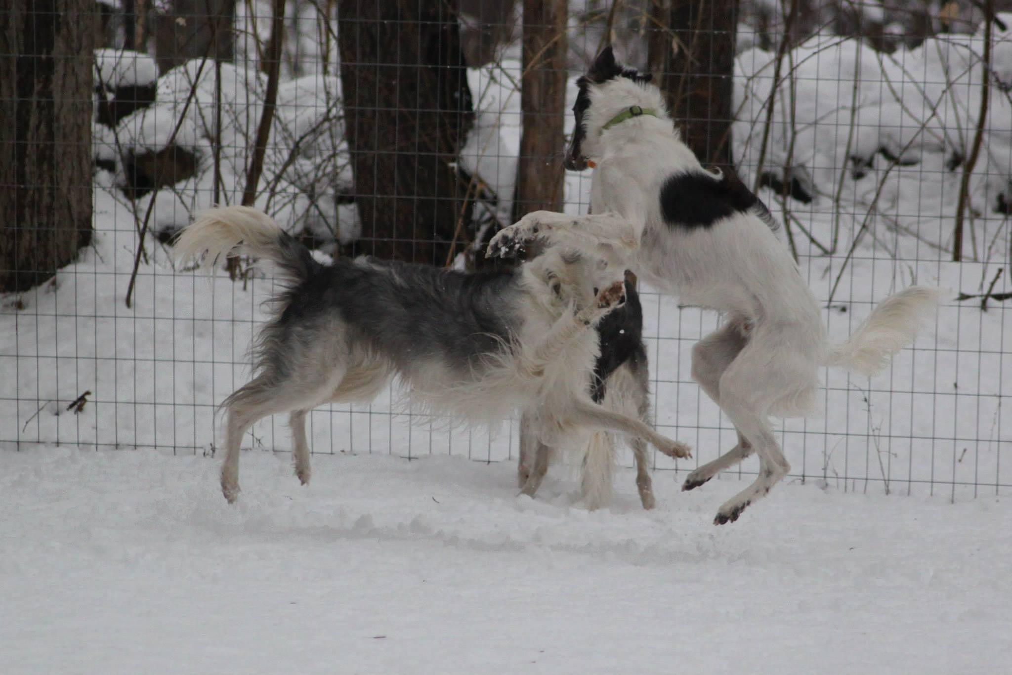 Snow Ballet by pam.kilby
