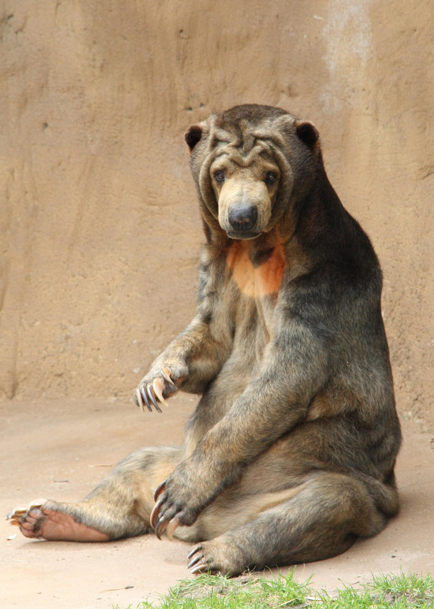 Bear at the Little Rock Zoo by Nicole Bixby