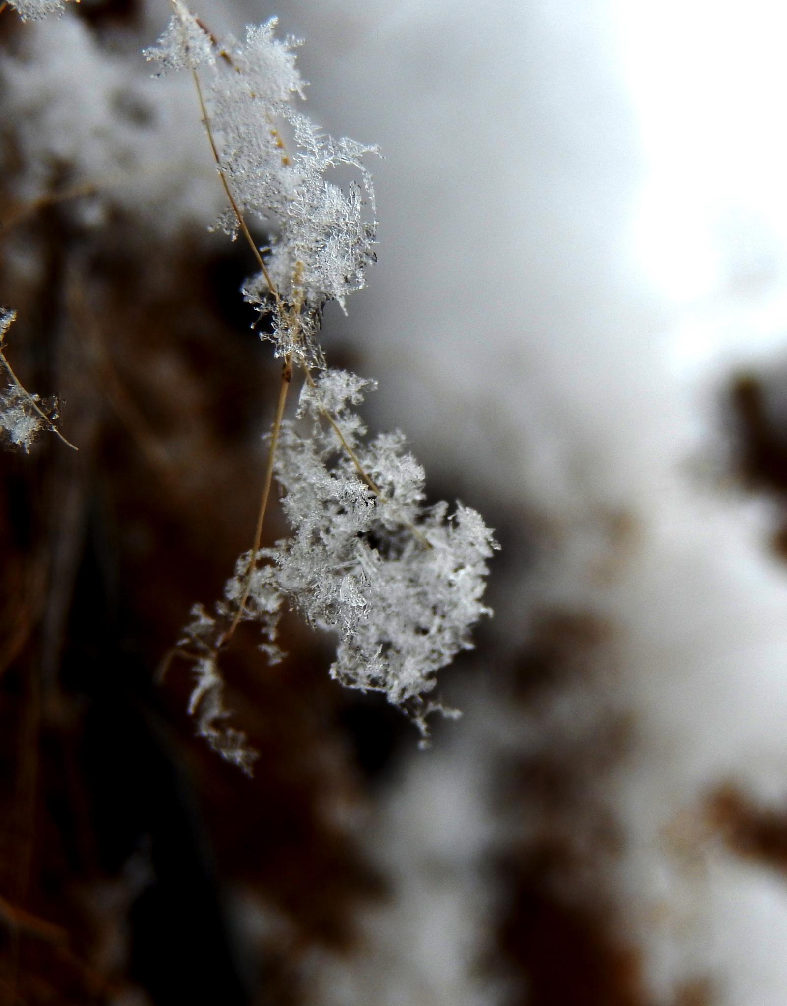 Frozen moment II by Dawn Kanne