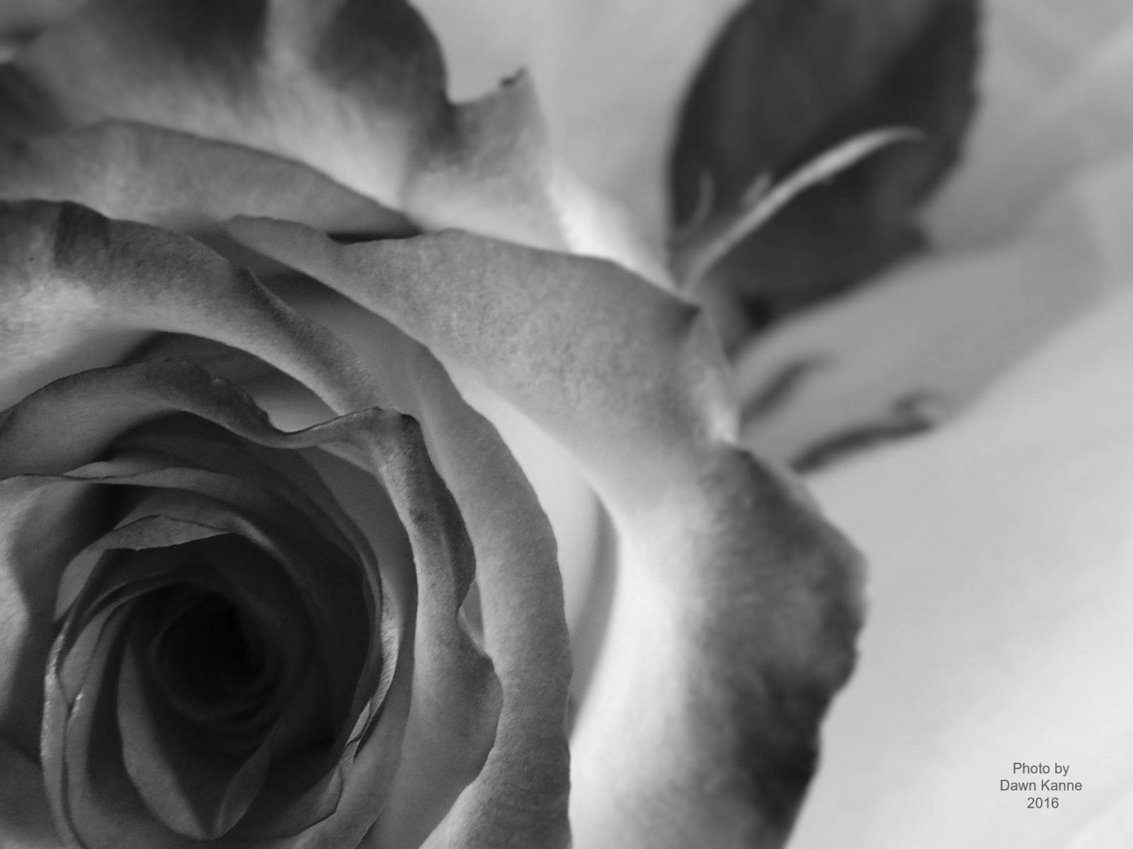 Shades of gray by Dawn Kanne