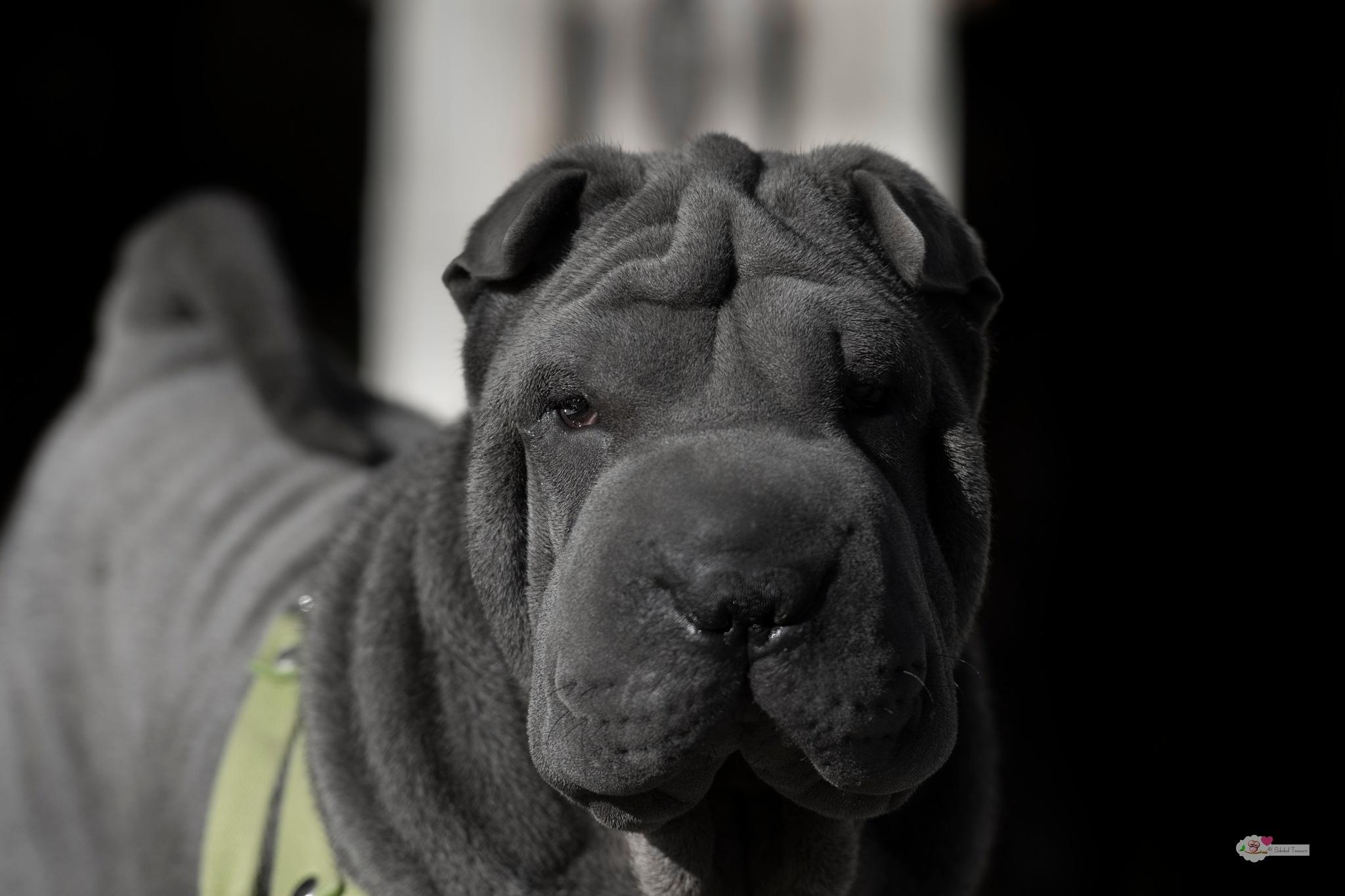 Hulk by Soledad.Tessore.Fotografía
