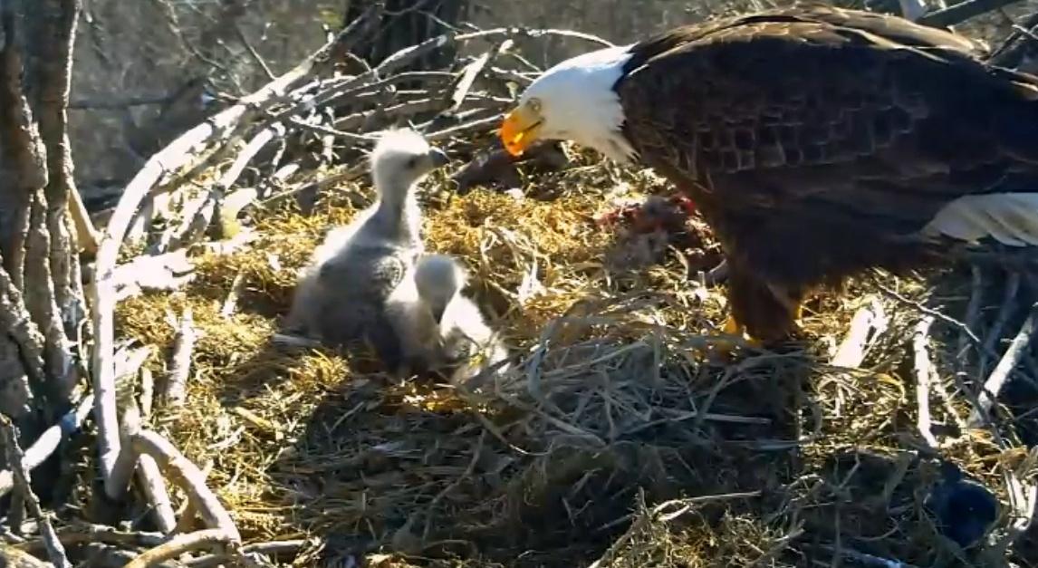 Early AM Feeding by pamela.raineri.1