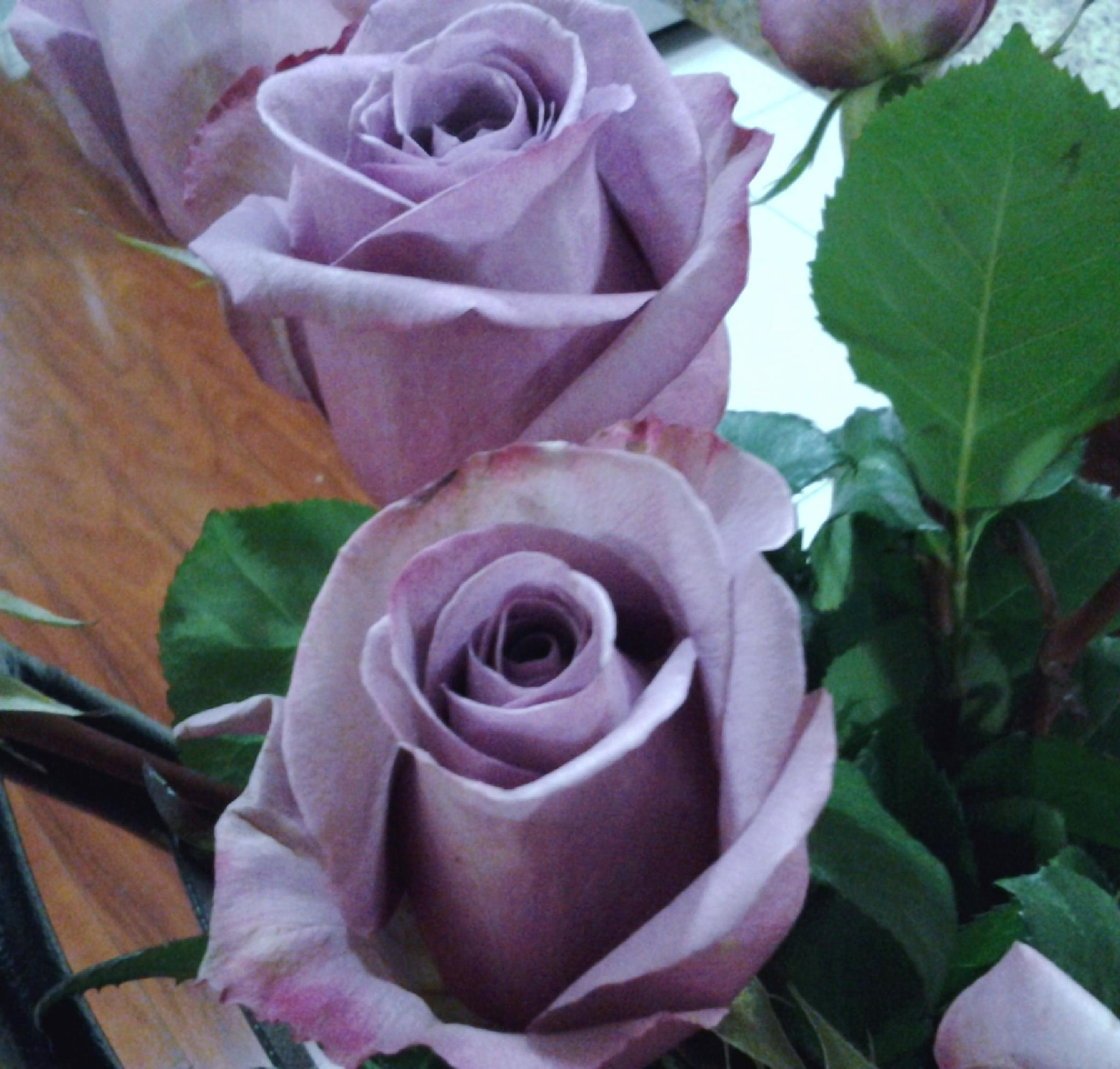 PURPLE ROSES by Aimee Byron