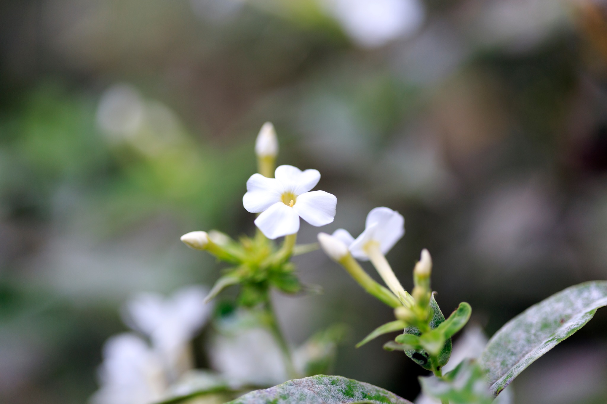 The Flower by Tonetski65