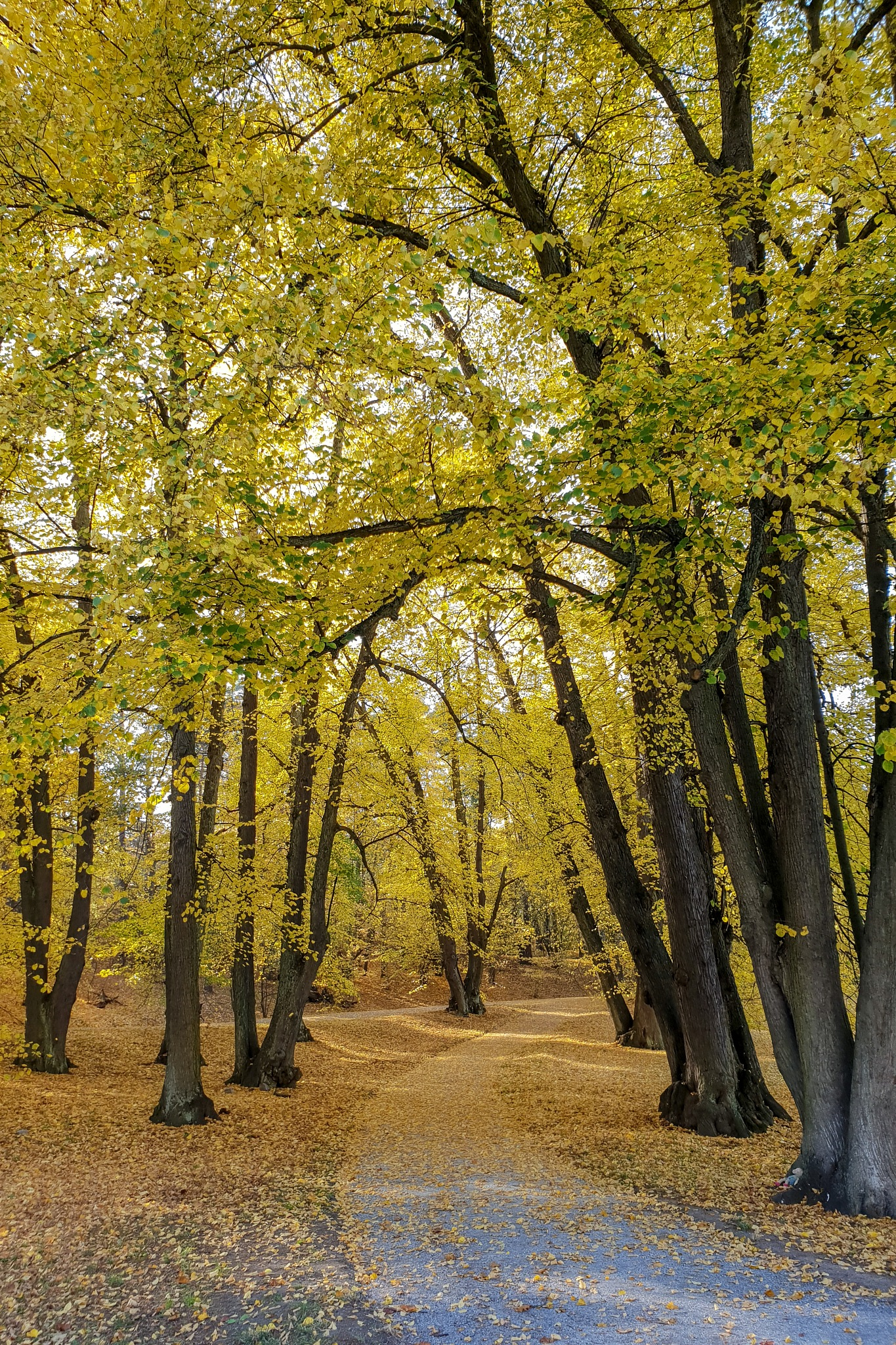 Yellow forest by Robert