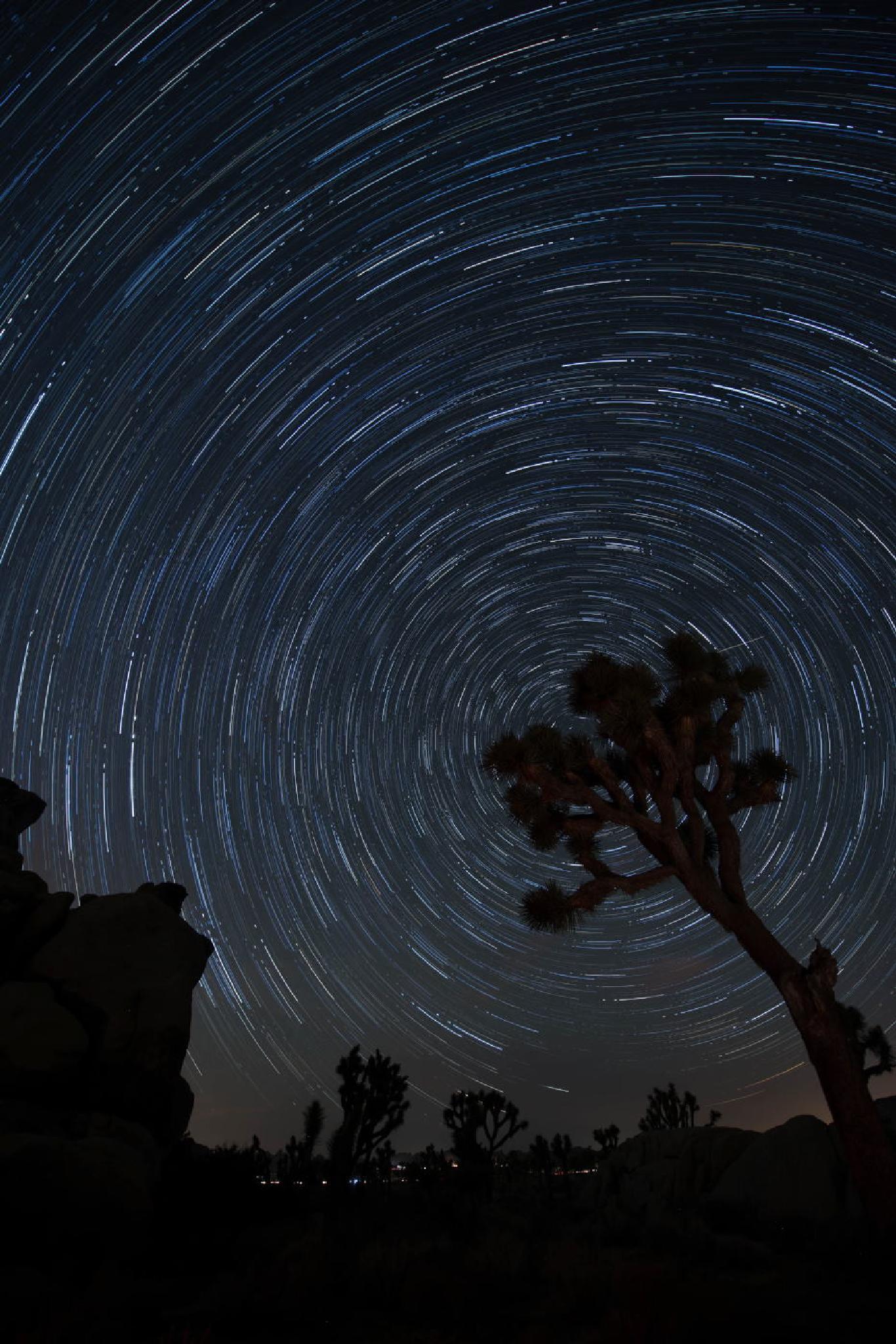 Star Trail at Joshua Tree NP by hirootani